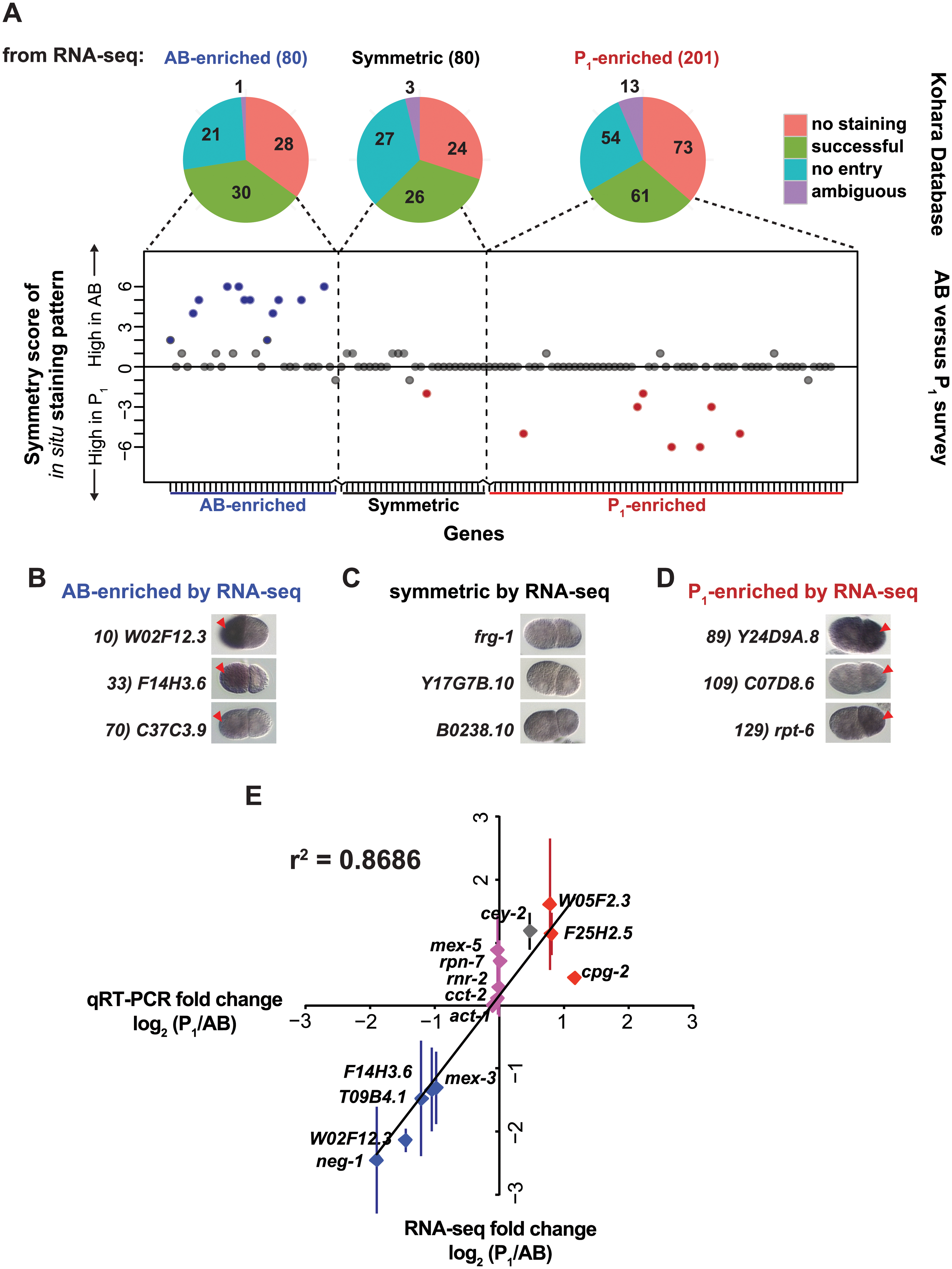 Complementary methods, <i>in situ</i> hybridization and qRT-PCR, support RNA-seq measurements.