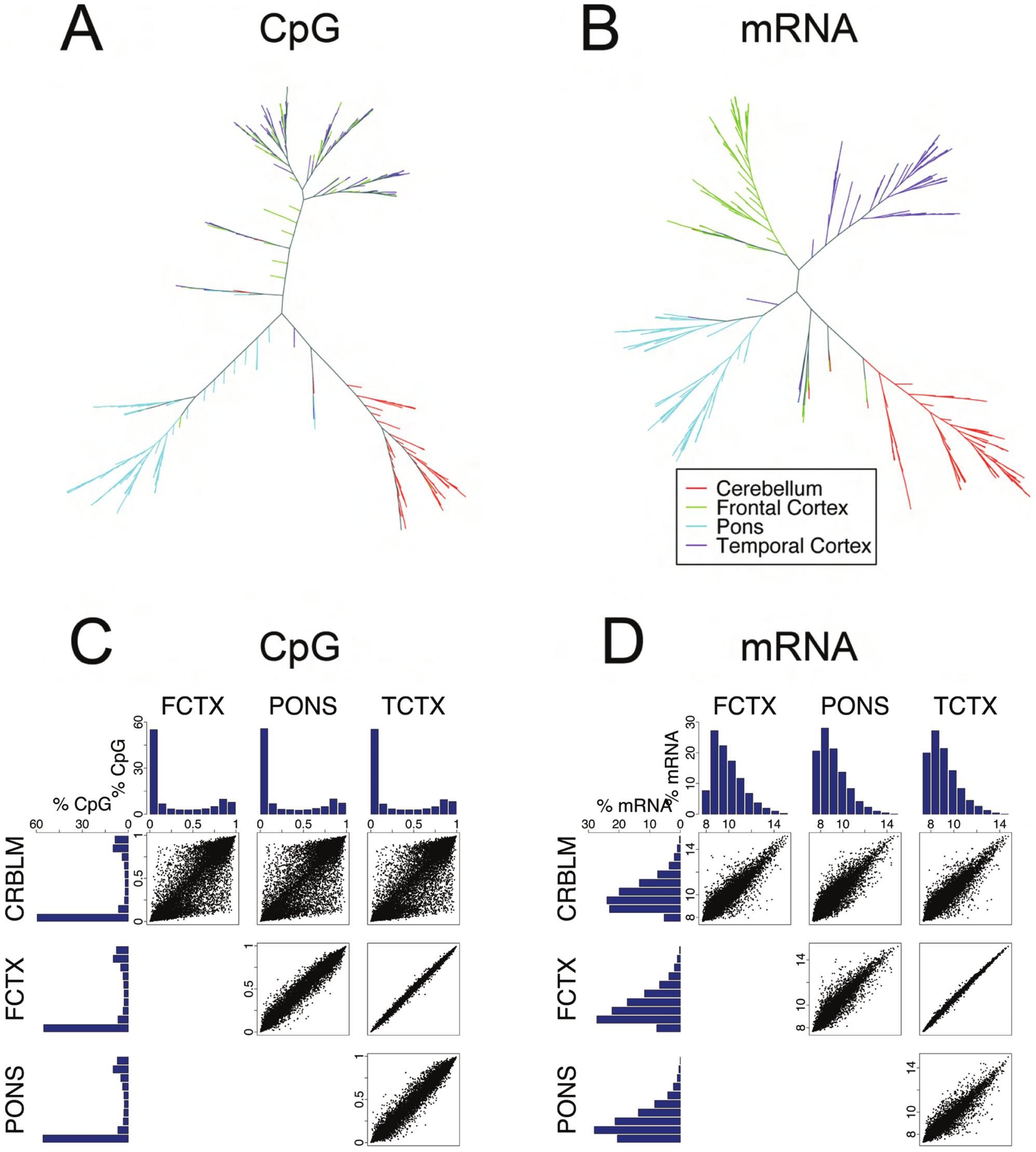 Analysis of CpG methylation and mRNA measures across four human brain regions.