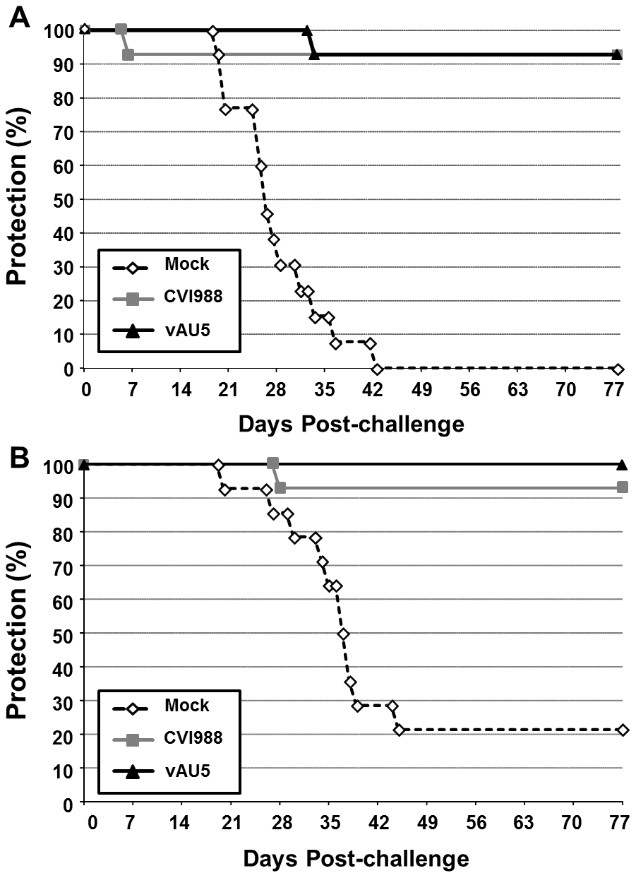 Immunization with the vAU5 mutant viruses protects chickens from lethal MDV infection.