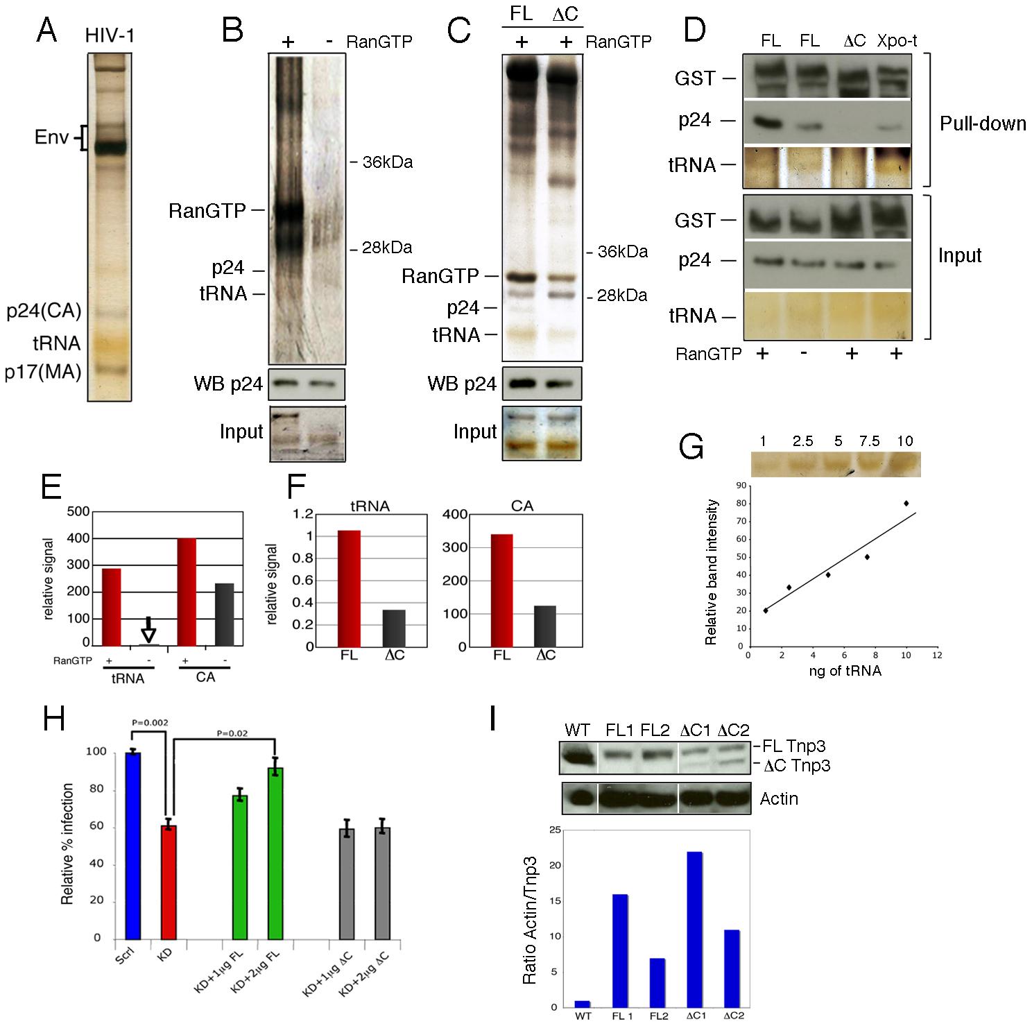 Tnp3 binds viral tRNA and CA.