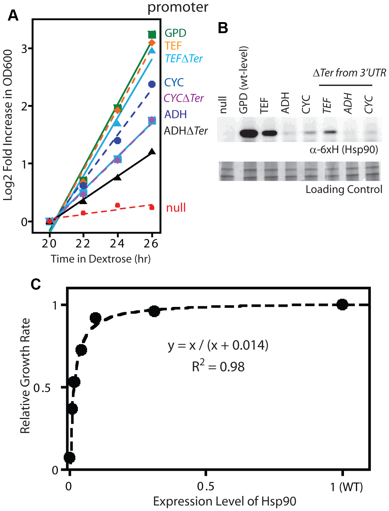 Effect of reduced Hsp90 expression on yeast growth.