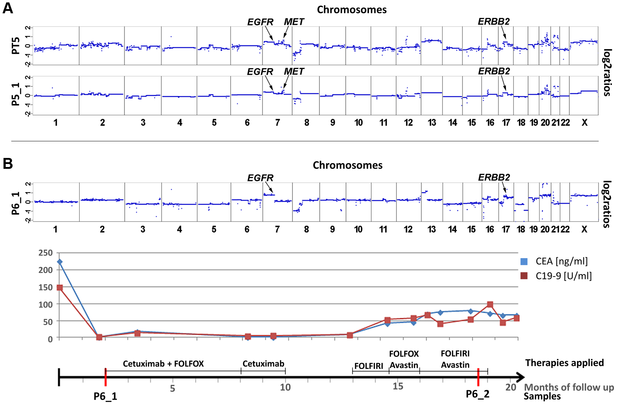 Cases with copy number changes in <i>EGFR</i>, <i>MET</i>, and <i>ERBB2</i>.