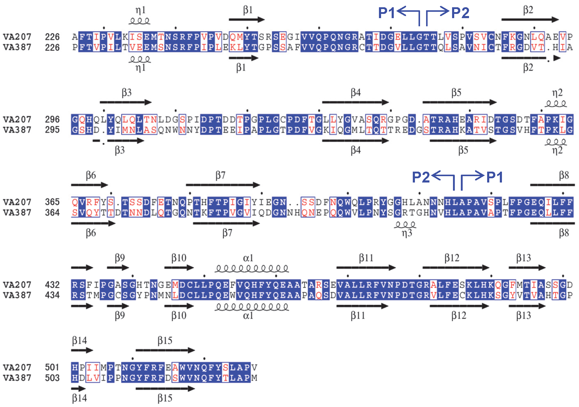 Structure-based sequence alignment between VA207 and VA387 P domains.