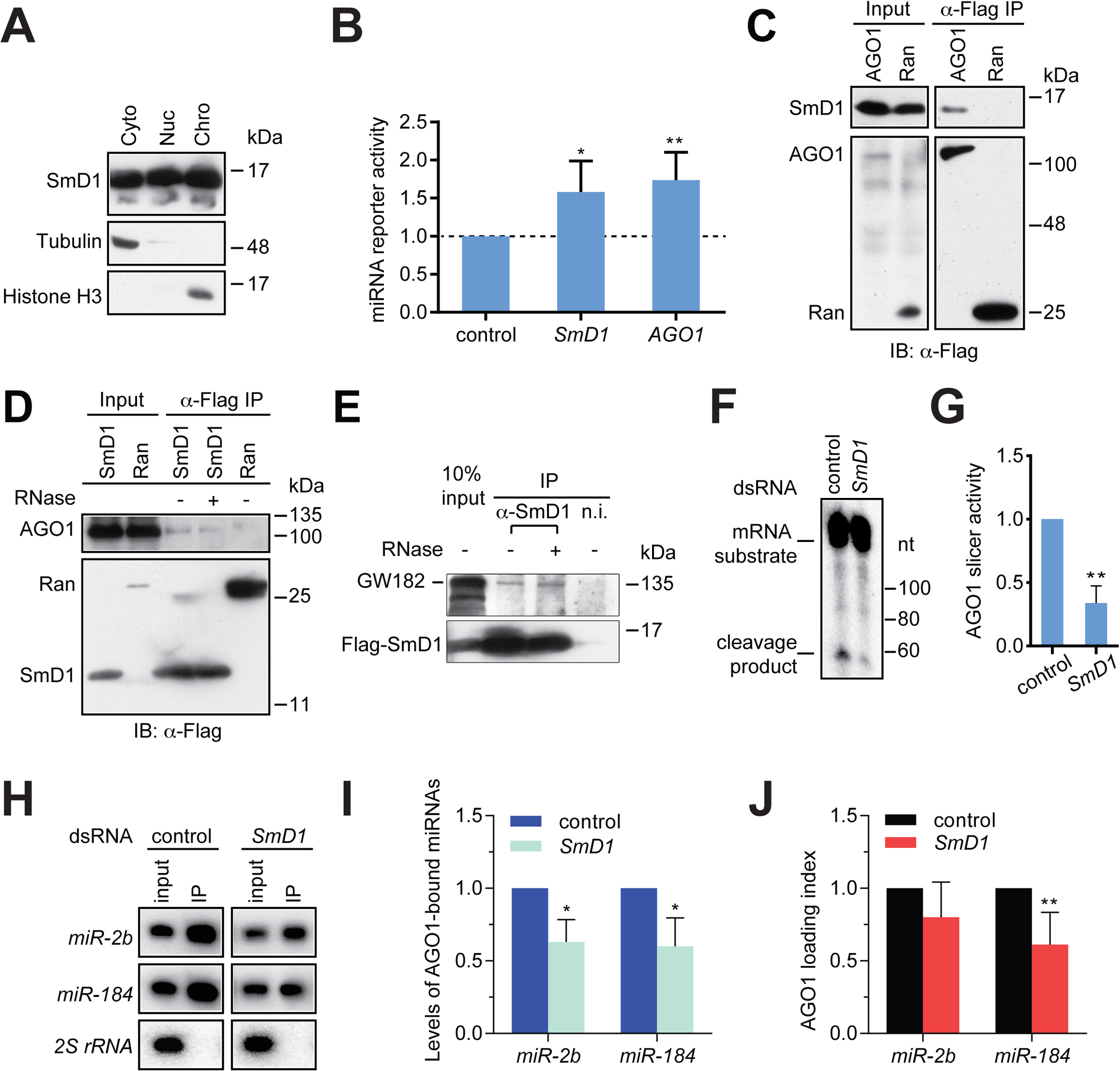SmD1 interacts with miRISC components and loss of SmD1 abolishes miRISC assembly/function.