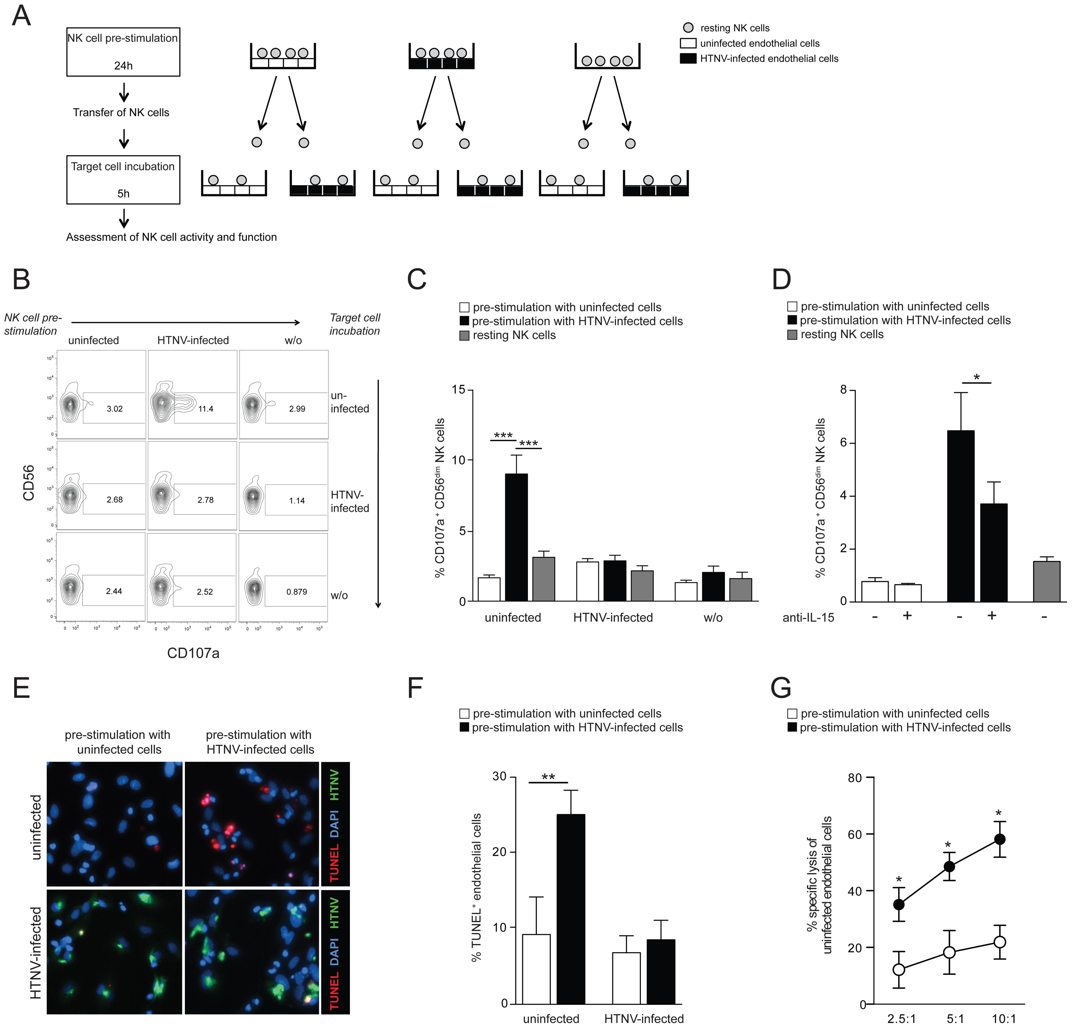 Hantavirus-activated CD56<sup>dim</sup> NK cells kill uninfected but not hantavirus-infected endothelial cells.