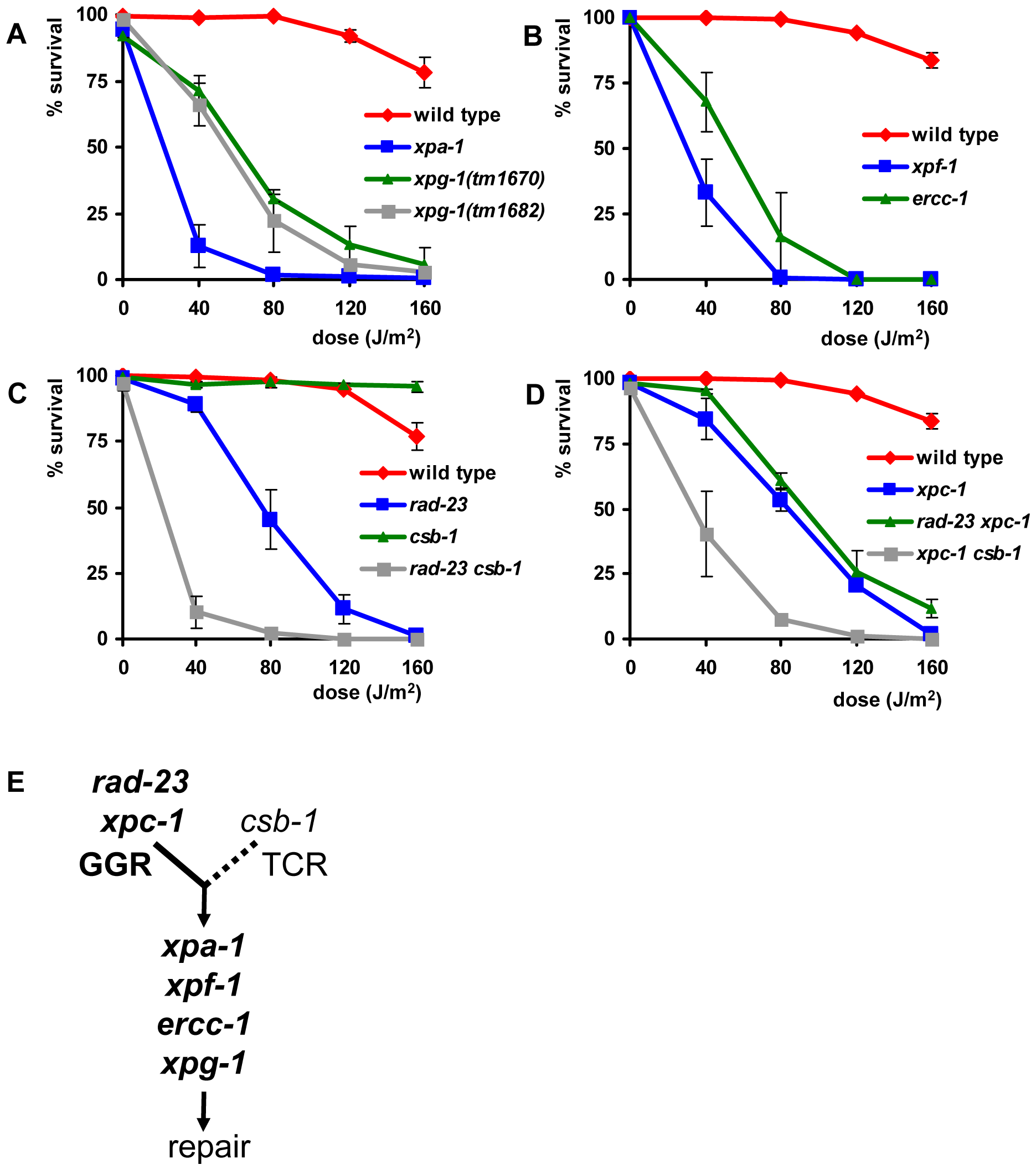 Germ cell and embryo survival following UV irradiation.