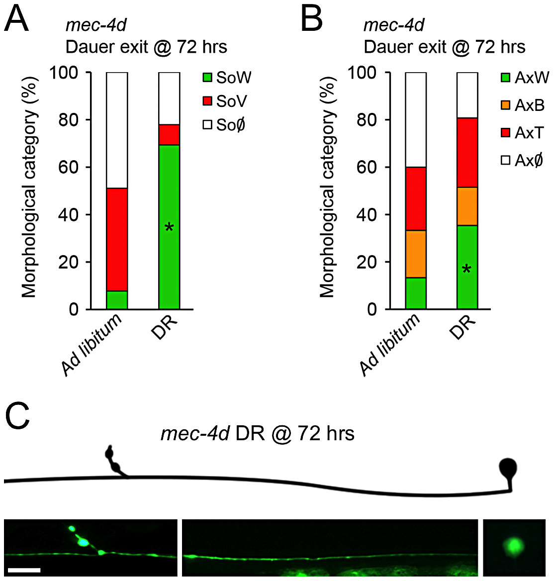 Dietary restriction inhibits <i>mec-4d</i>–dependent neuronal degeneration in <i>C. elegans</i>.