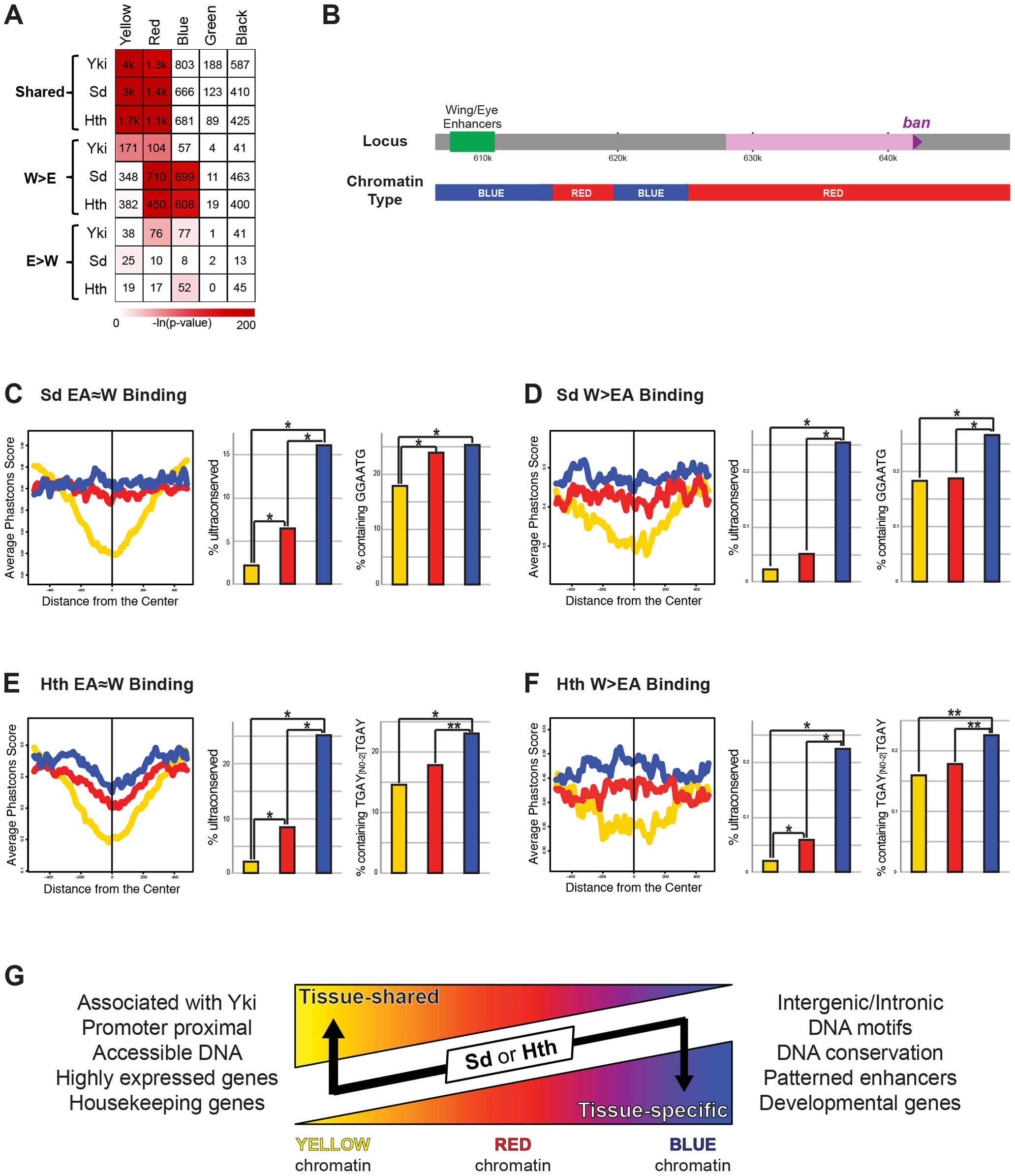 Relationship between Yki, Sd, and Hth binding and chromatin state.