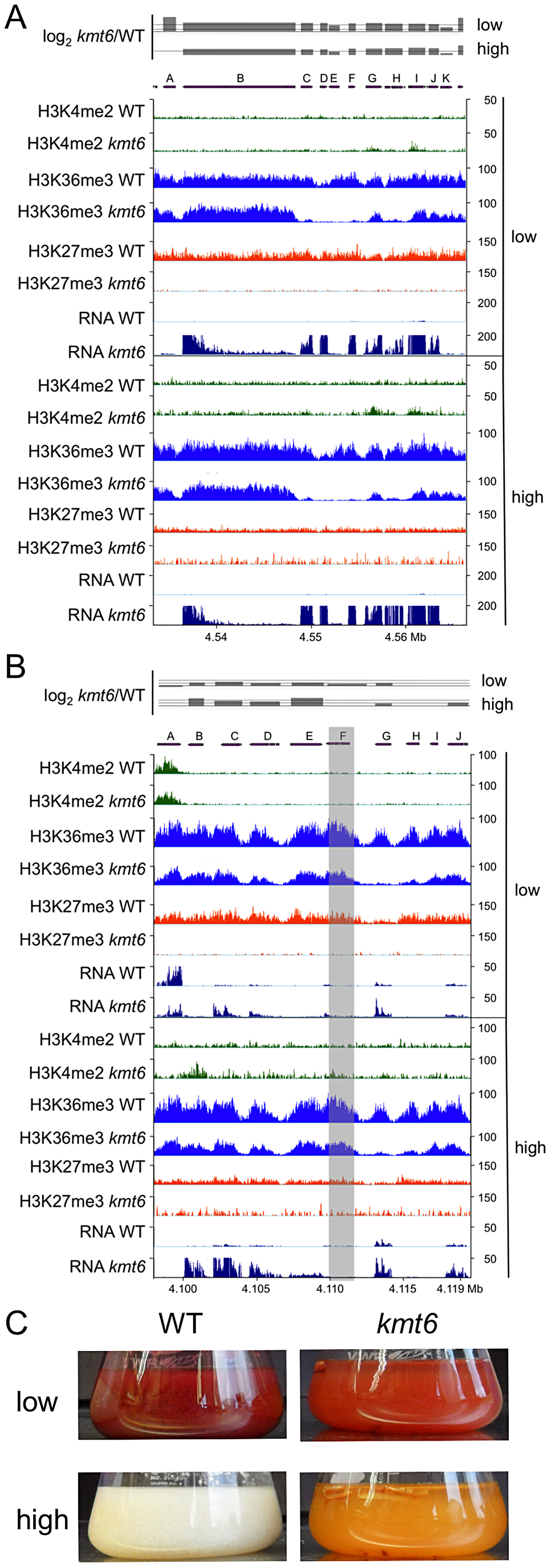 Specific gene clusters are upregulated in <i>kmt6</i>.