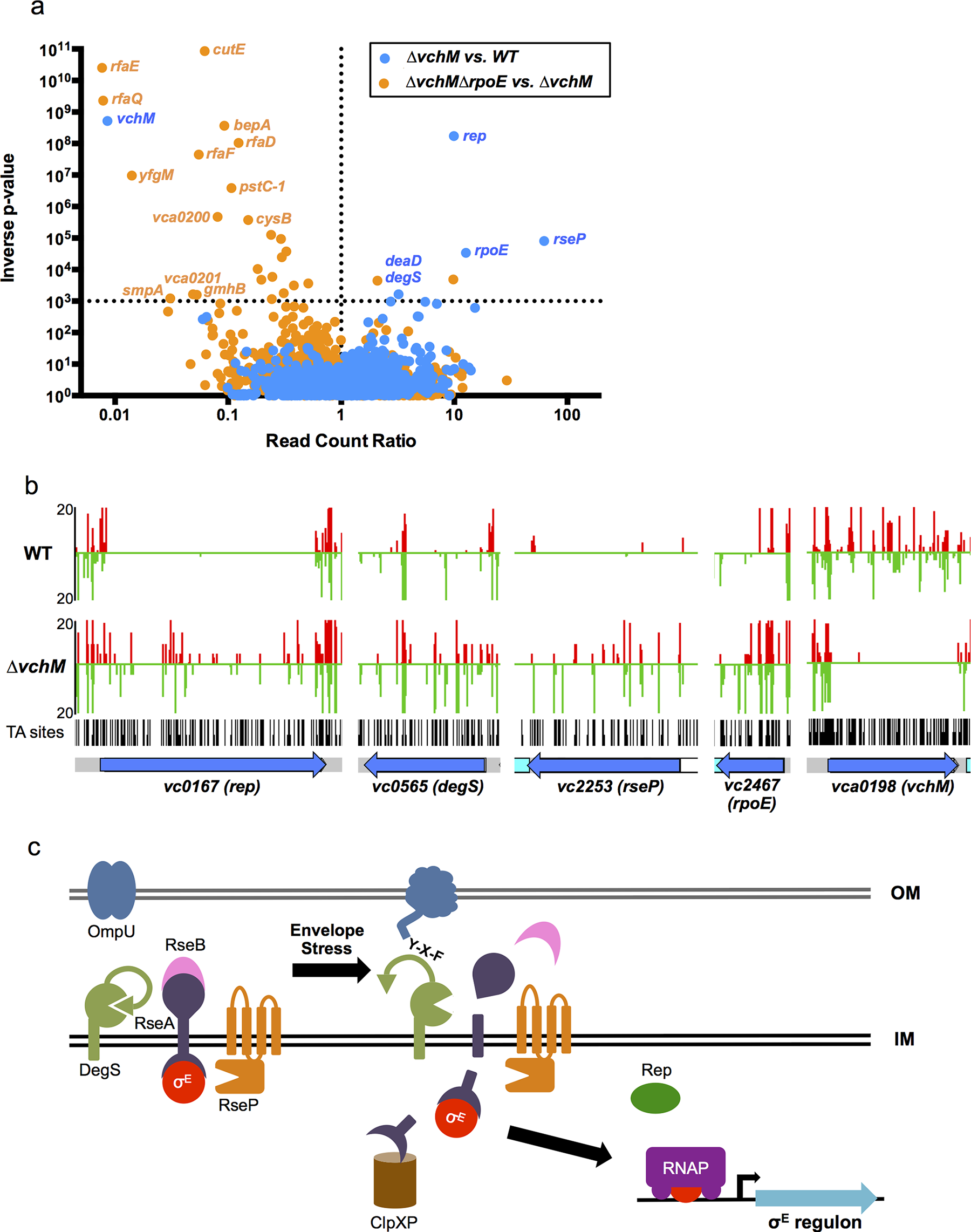 TIS-based identification of loci that interact genetically with <i>vchM</i> or <i>rpoE</i>.