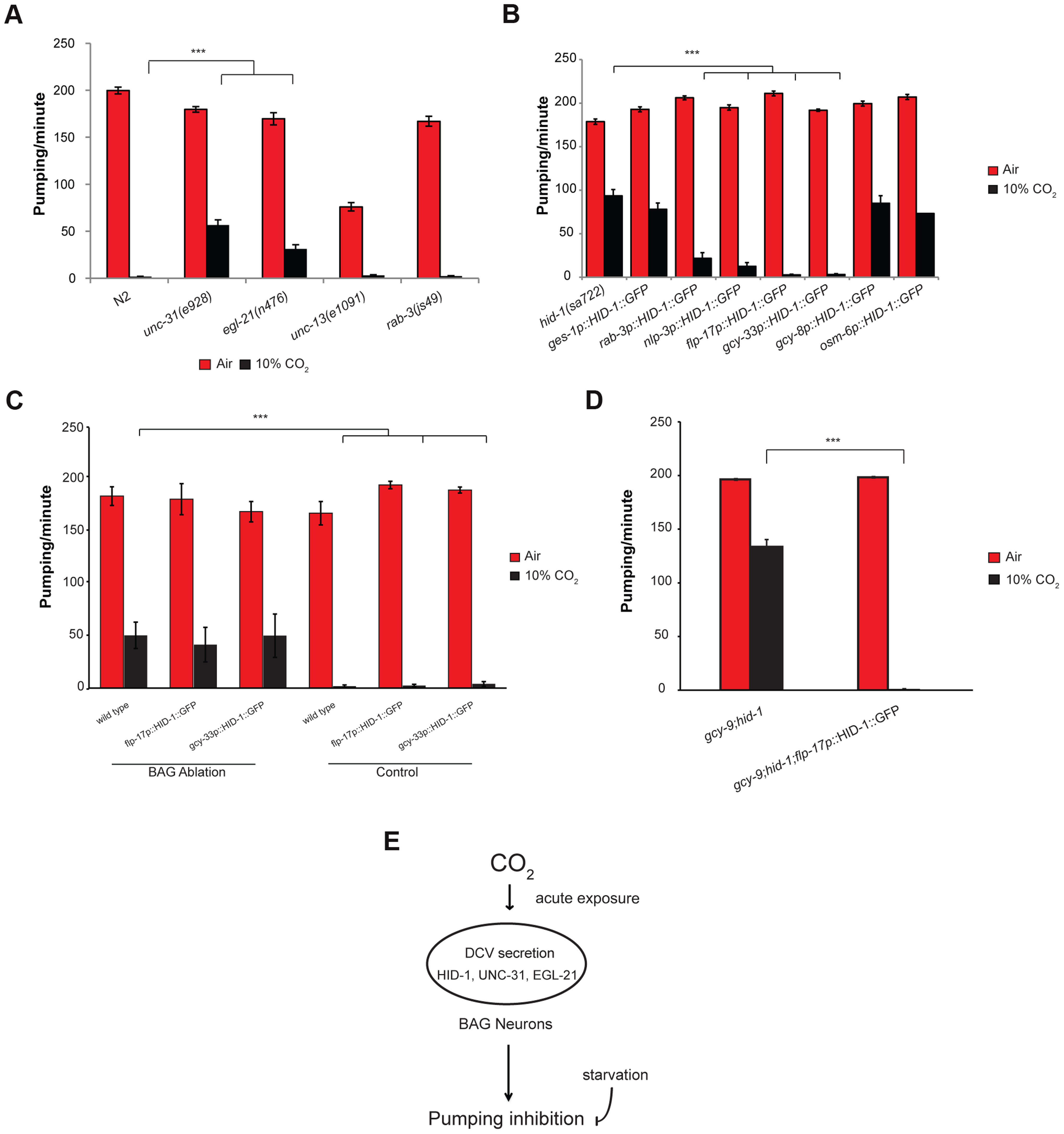 The effect of high CO<sub>2</sub> level on the pharynx requires HID-1 activity in the BAG neurons.