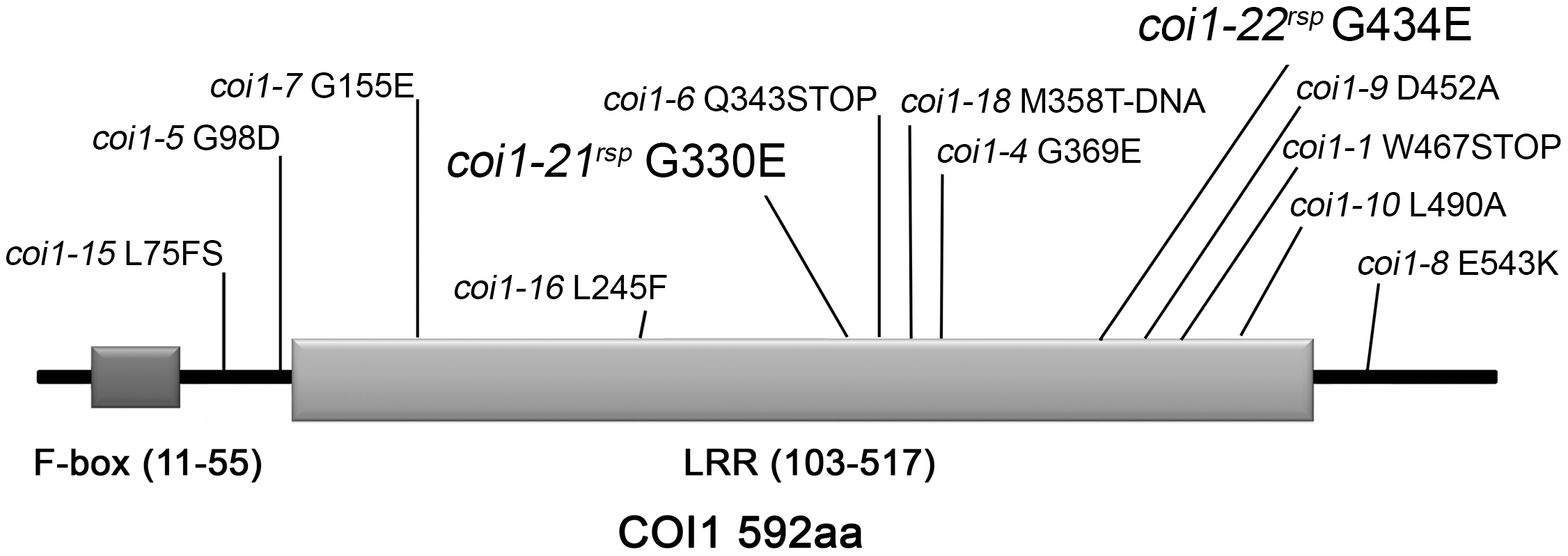 Mutations identified in COI1.