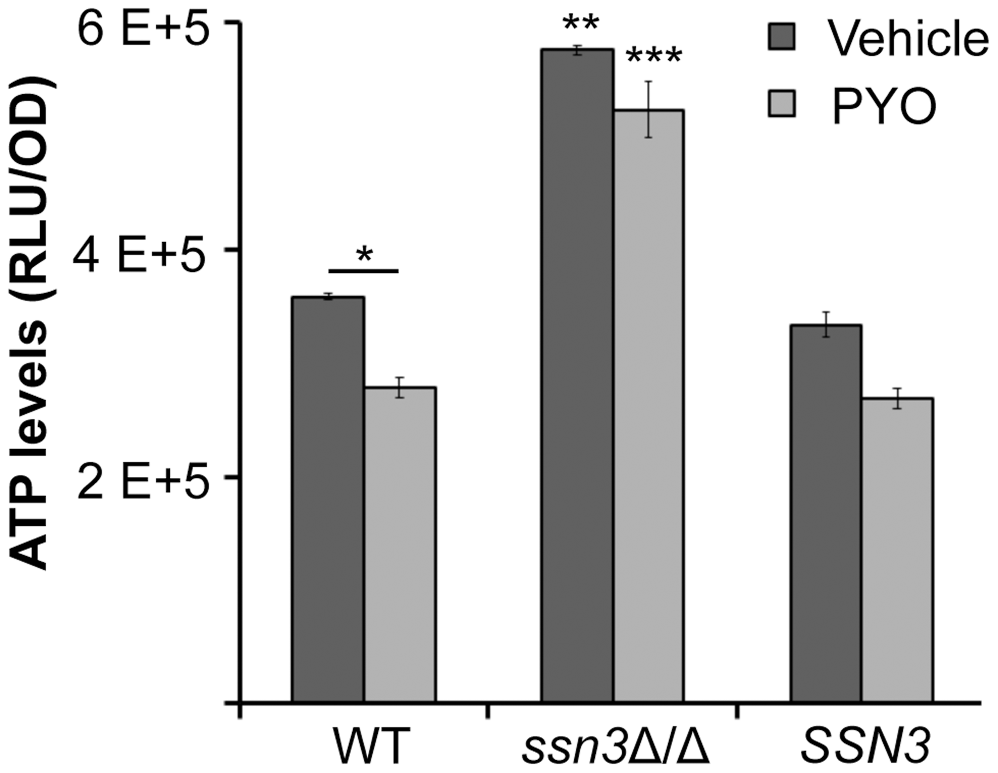 The <i>ssn3</i> mutant contains higher levels of ATP in the presence and absence of PYO.
