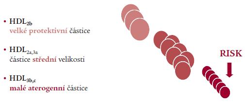 Vztah velikosti lipoproteinových částic k riziku – HDL (GGE).