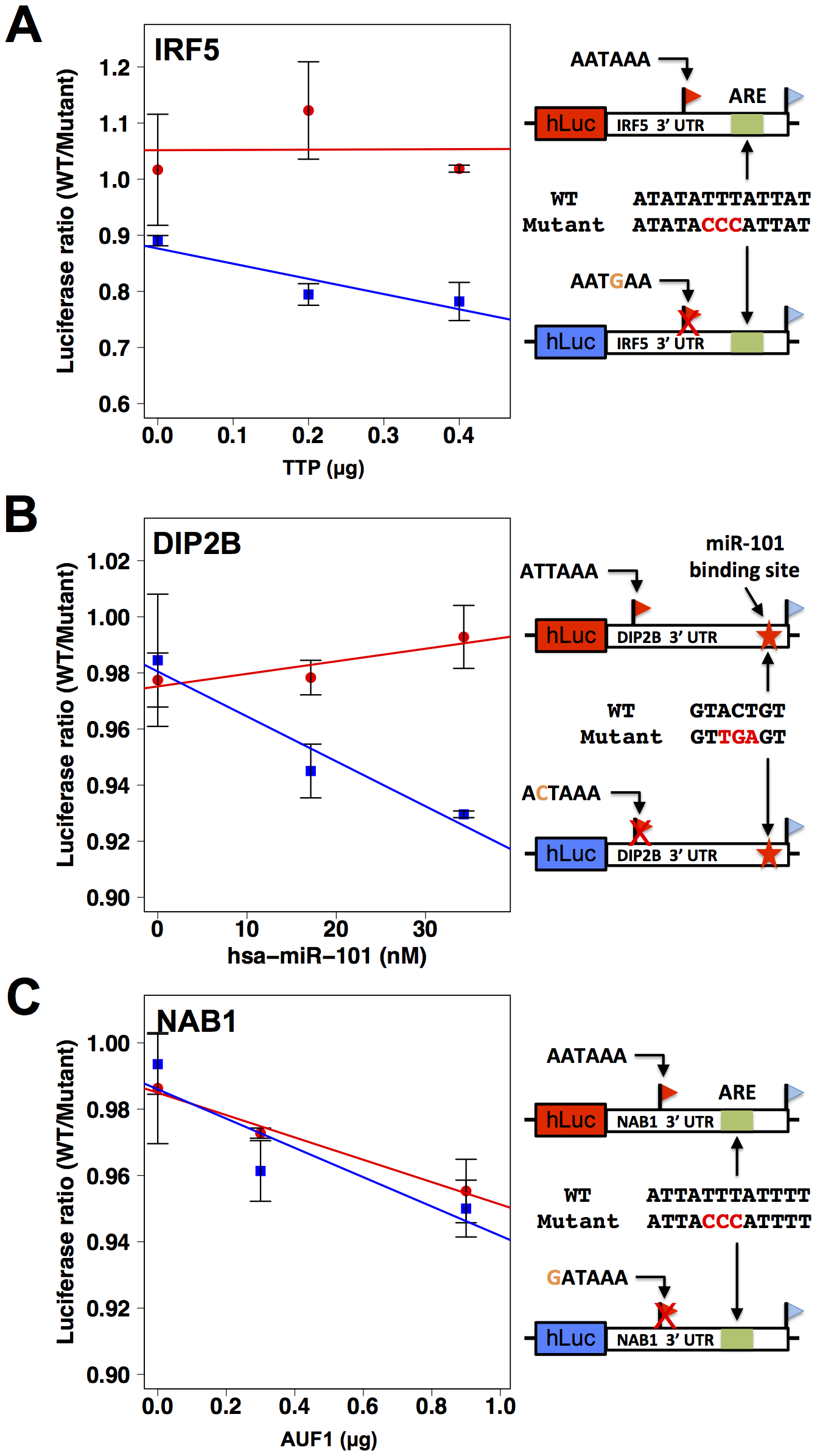 3′ sequence motifs are required for the regulatory response to <i>trans</i>-acting factors.
