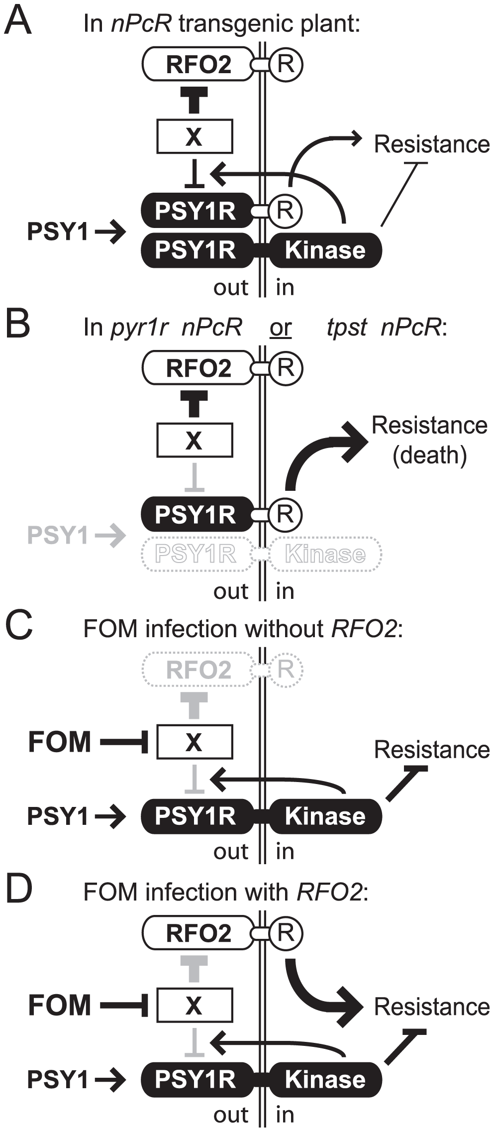 Model for RFO2-mediate resistance.