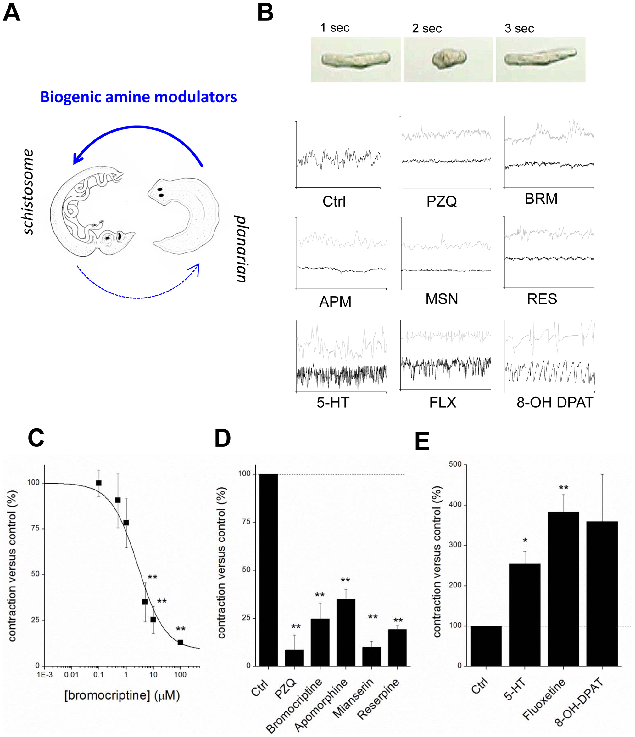 Compounds that miscue planarian polarity regulate schistosomule contractility.