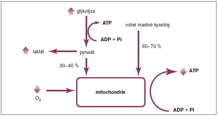 Schéma 3. Srdeční metabolismus za anaerobních podmínek.