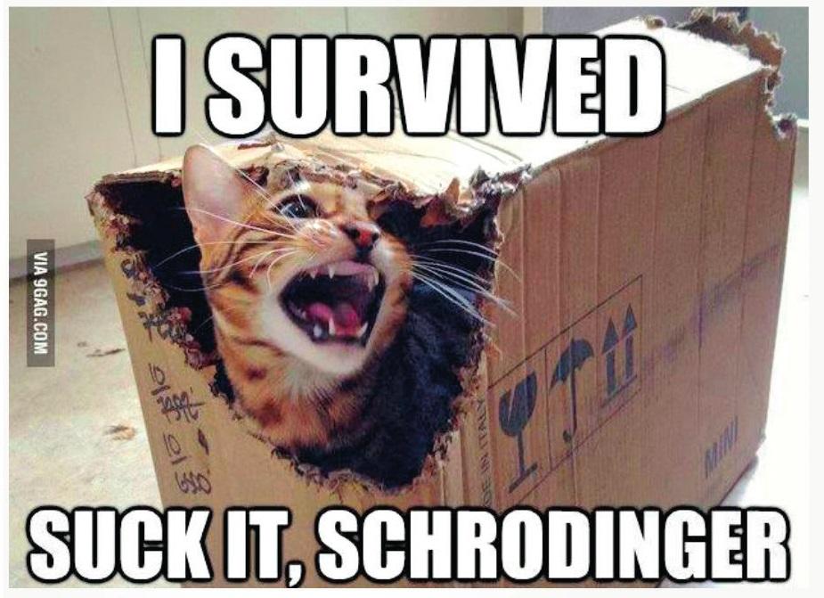 Schrödingerova mačka prežila. Superpozíciu pozorovanie – meranie zmenilo v reálny optimálny stav (3 – so súhlasom autora).