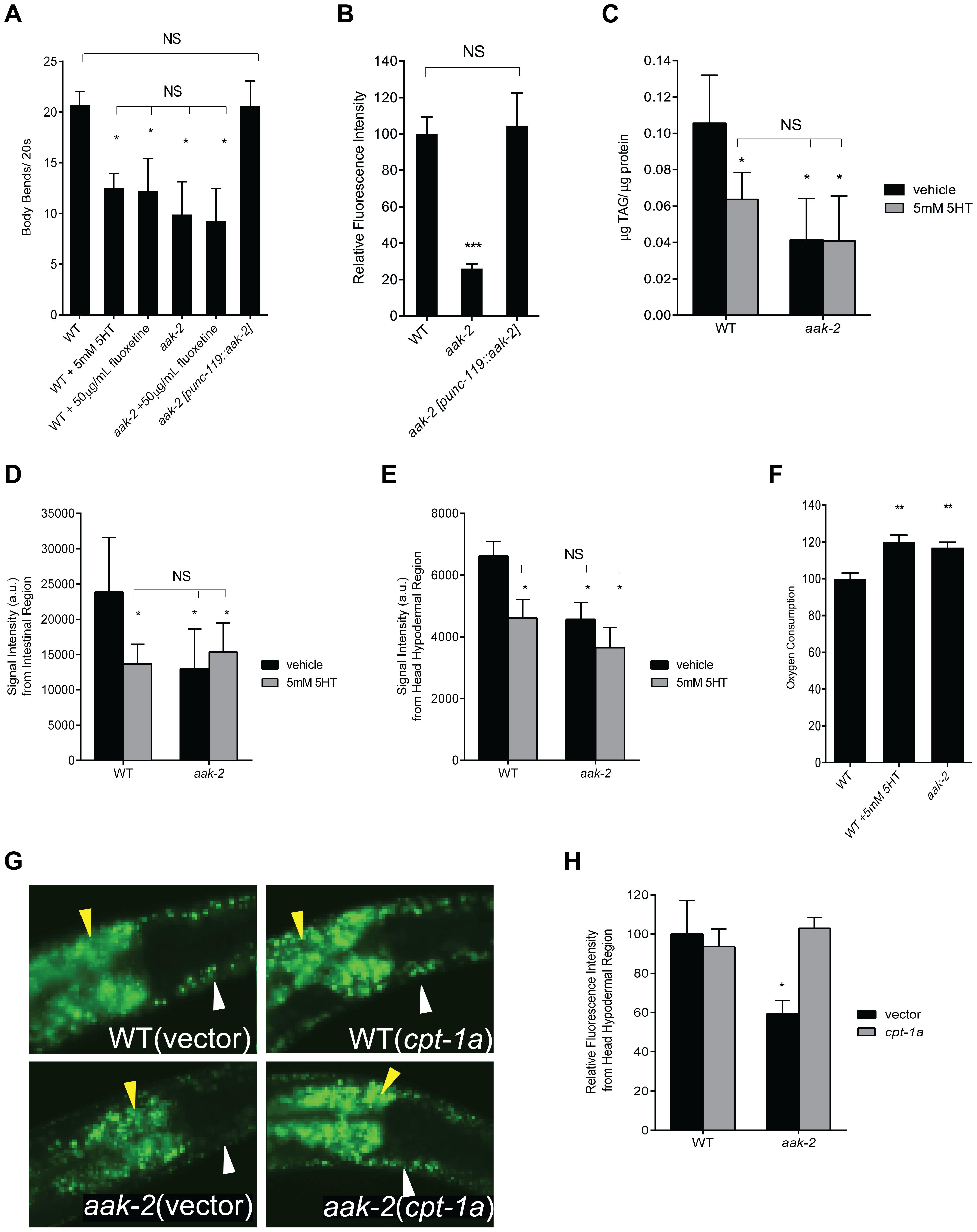Loss of <i>aak-2</i> mimics increased serotonin signaling.