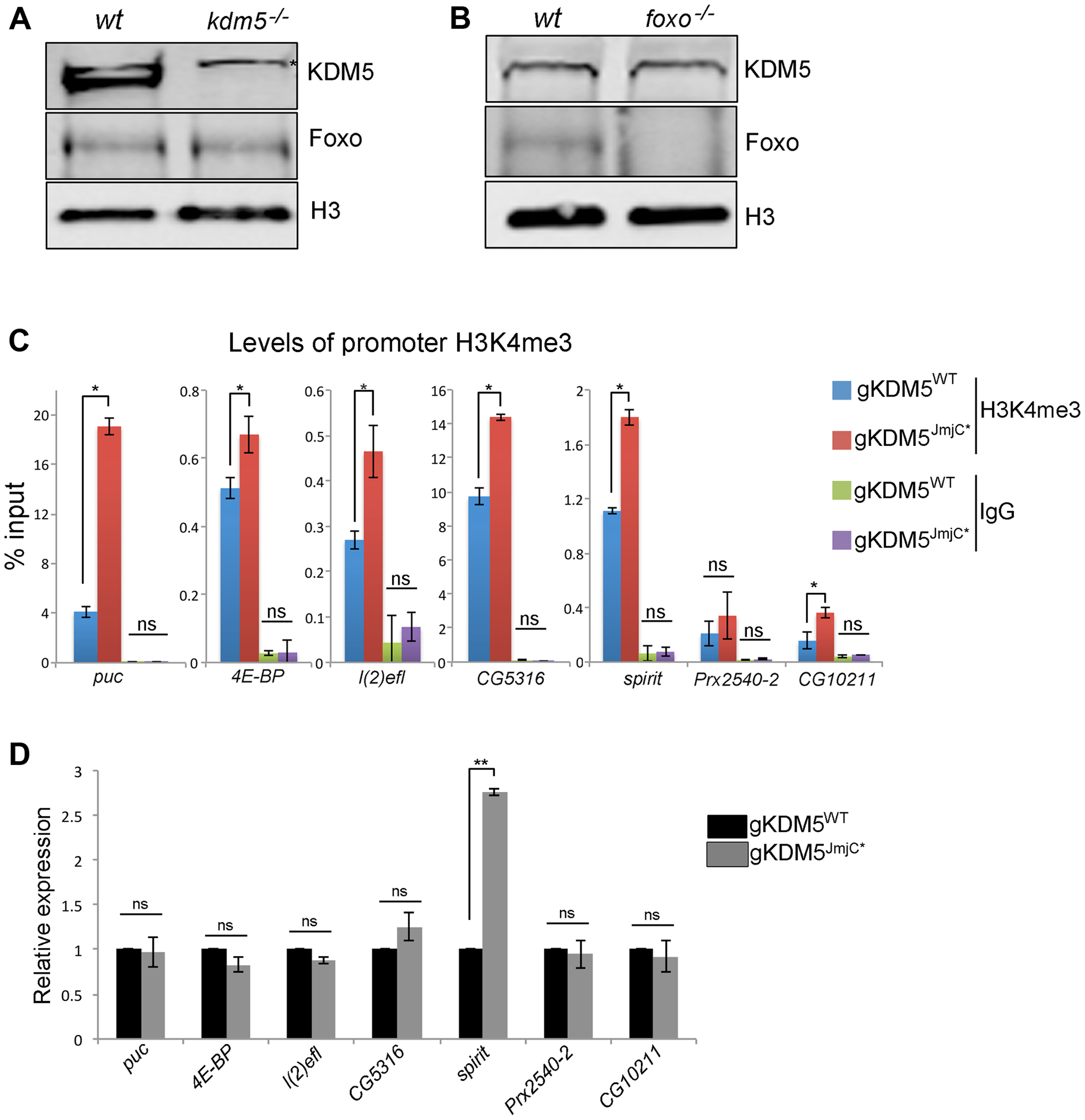 The H3K4me3 demethylase activity of KDM5 is not required for it to regulate KDM5-Foxo target genes.