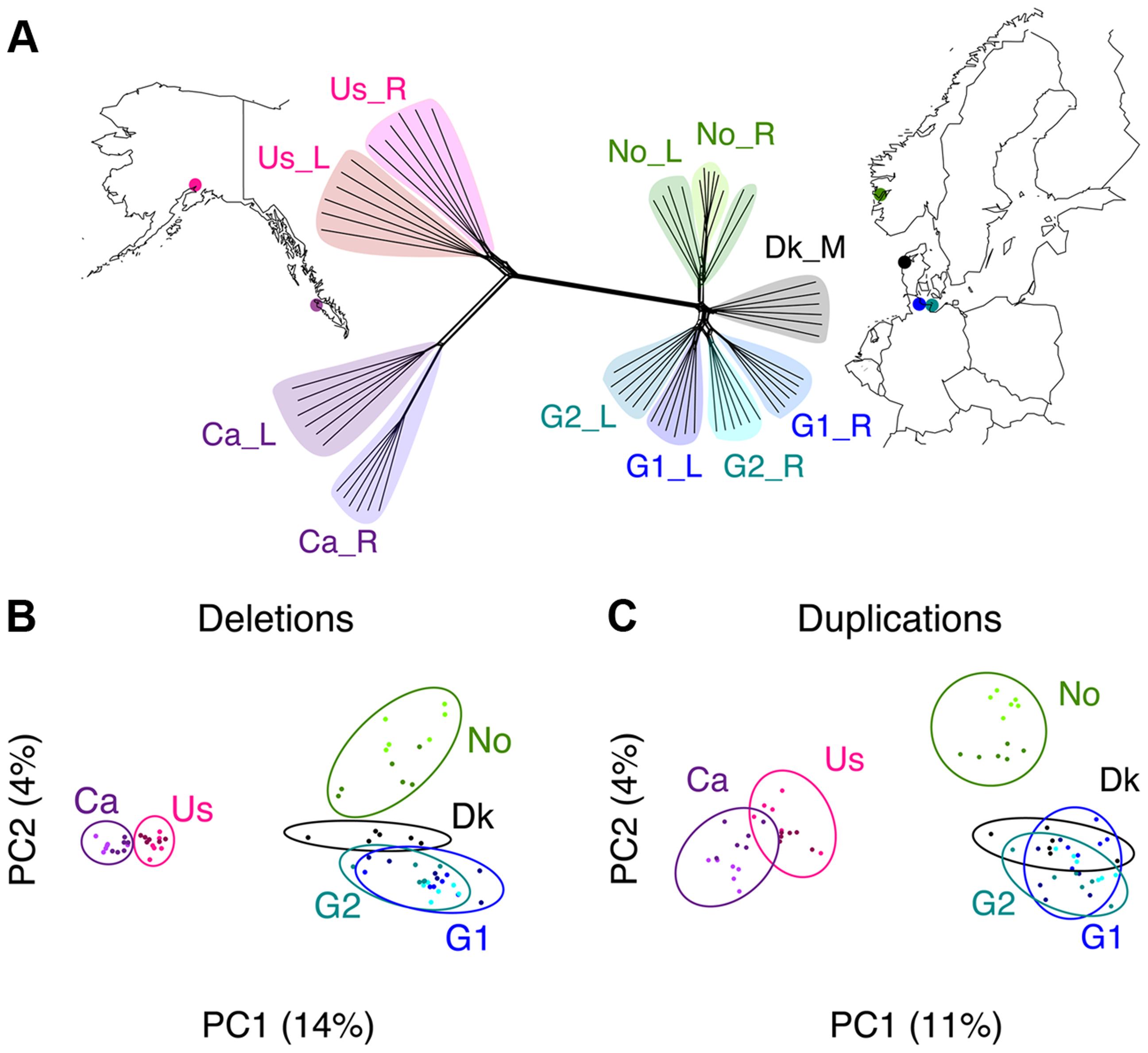 Phylogenomic relationships among samples.