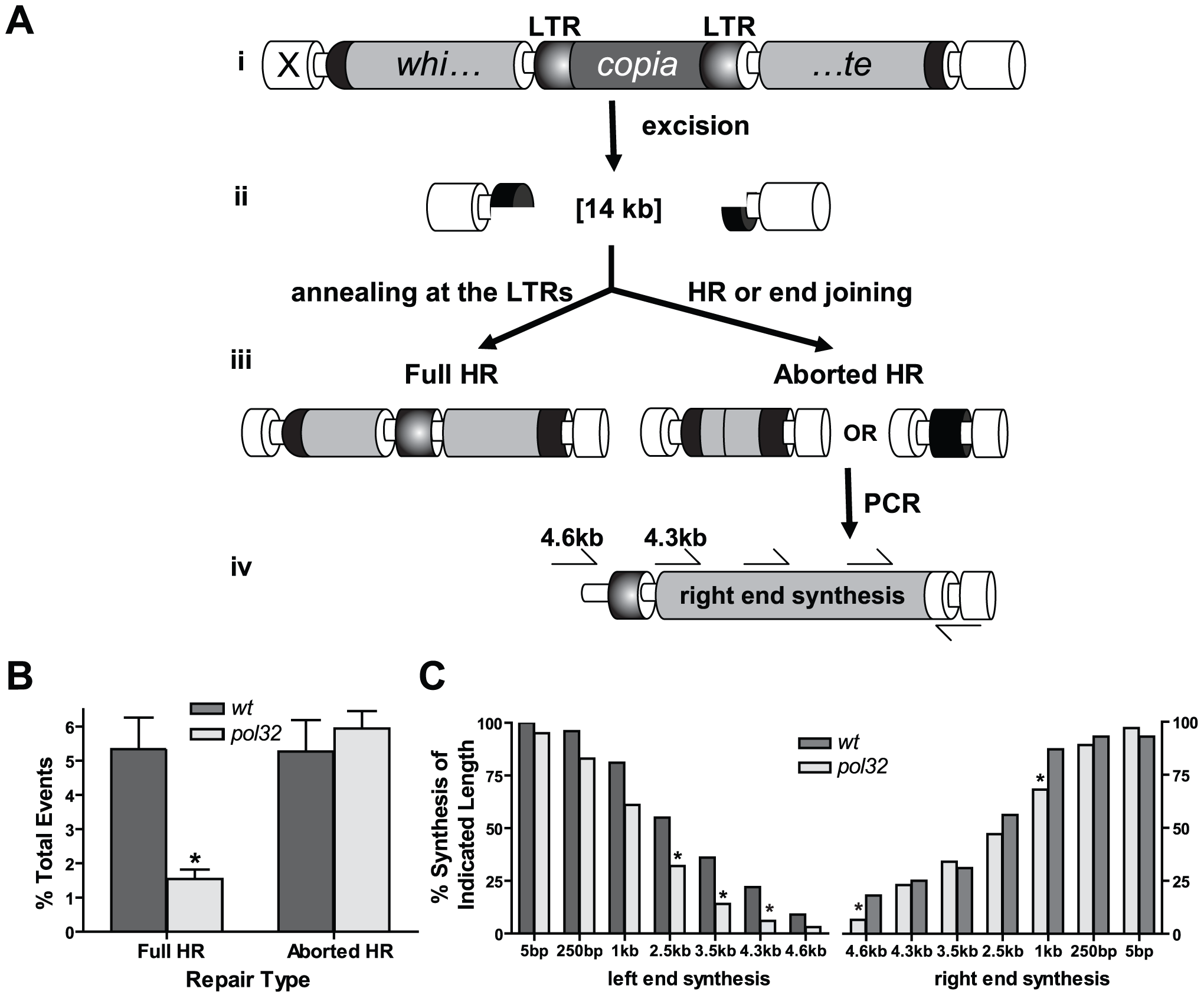 <i>pol32</i> mutants are impaired in DNA synthesis during HR repair.