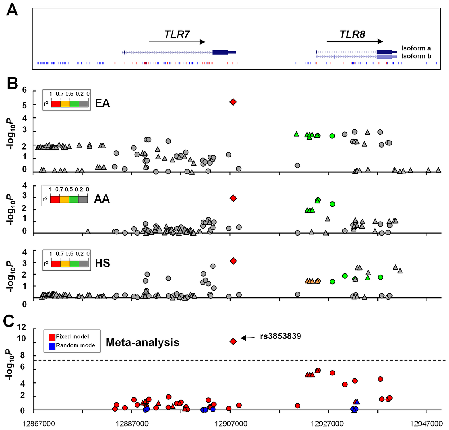 Allelic associations of SNPs in the <i>TLR7-TLR8</i> region with SLE.