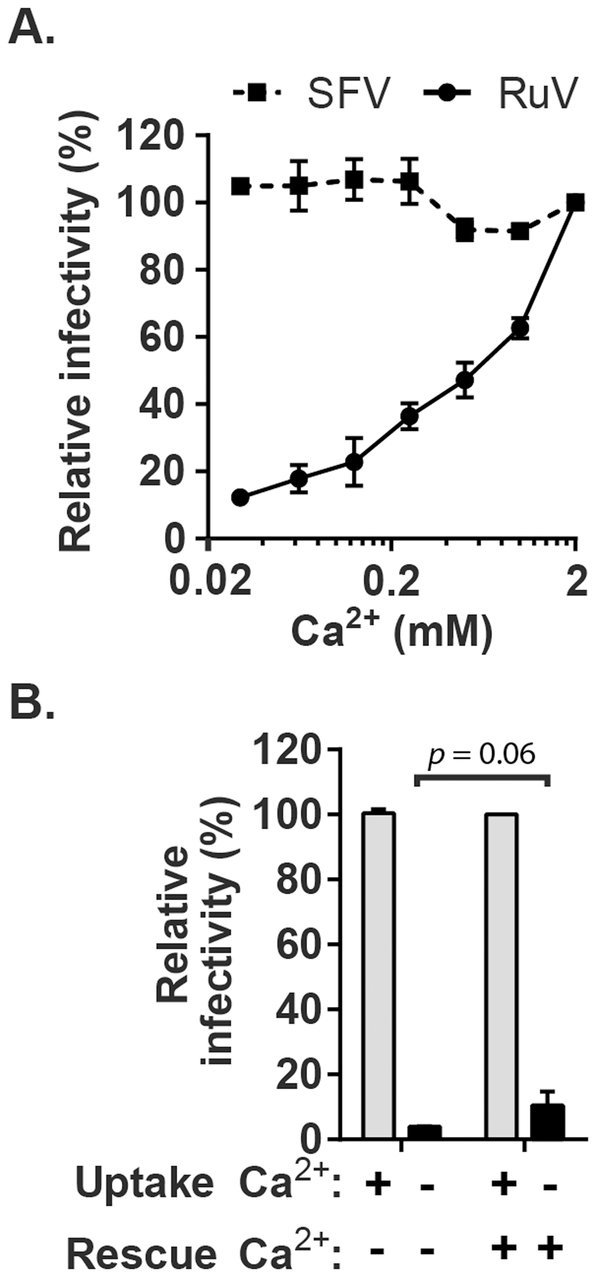 Effect of Ca<sup>2+</sup> on RuV infection.