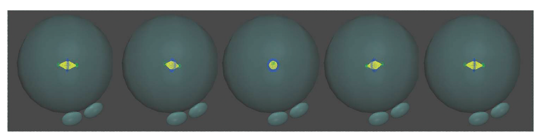 Líniu delenia v 1. mitóze ovplyvňuje poloha prvojadier pred nástupom syngamie a možná orientácia deliaceho vretienka v priestore. Autor 3D modelov D. Hlinka