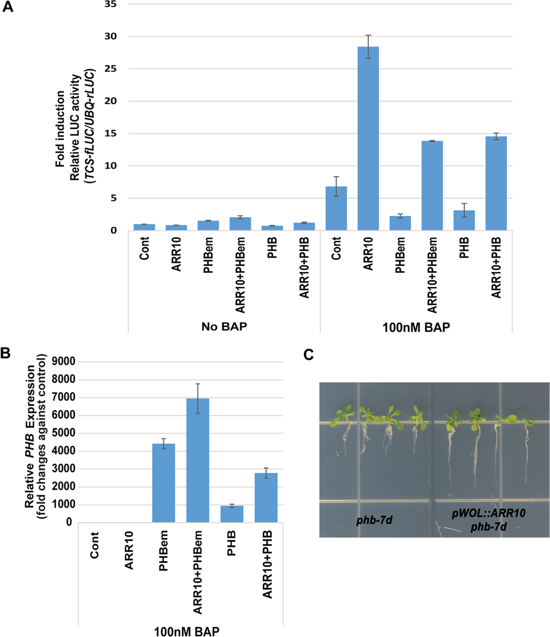 PHB suppresses B-ARR activities in the presence of high cytokinin.