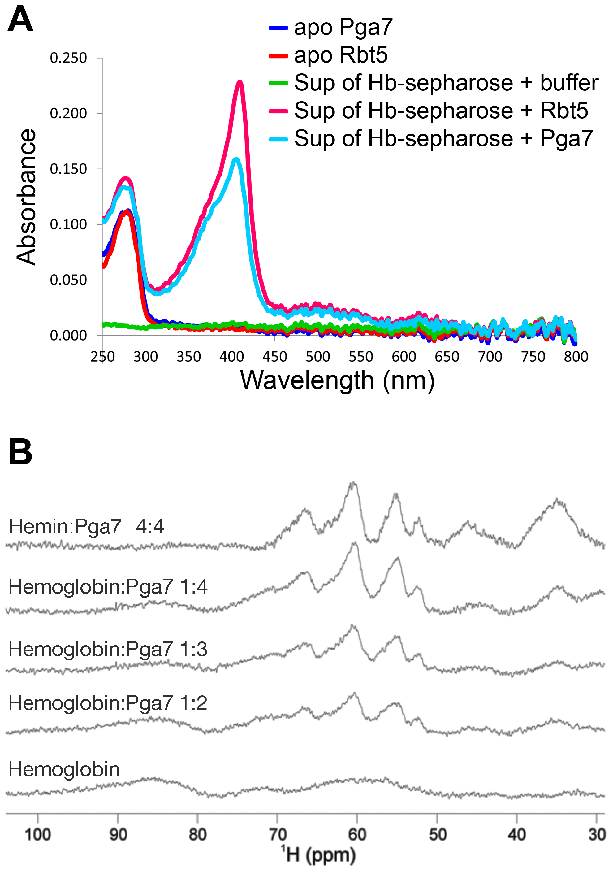 Pga7 and Rbt5 can extract heme from hemoglobin.