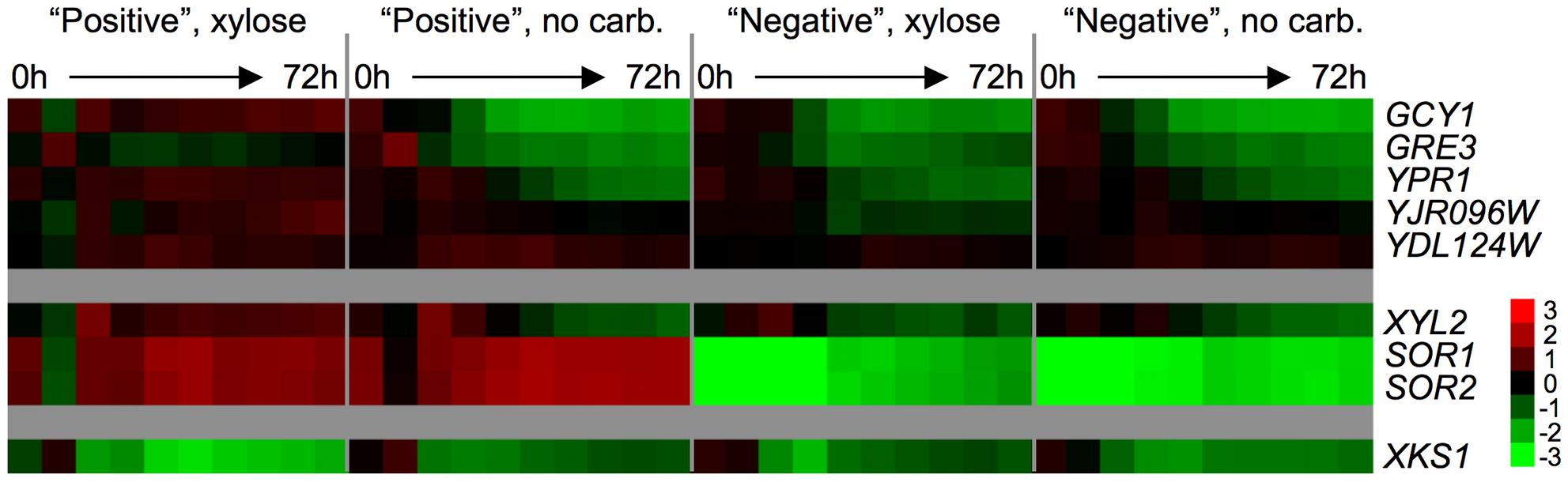 Endogenous xylose pathway gene expression.