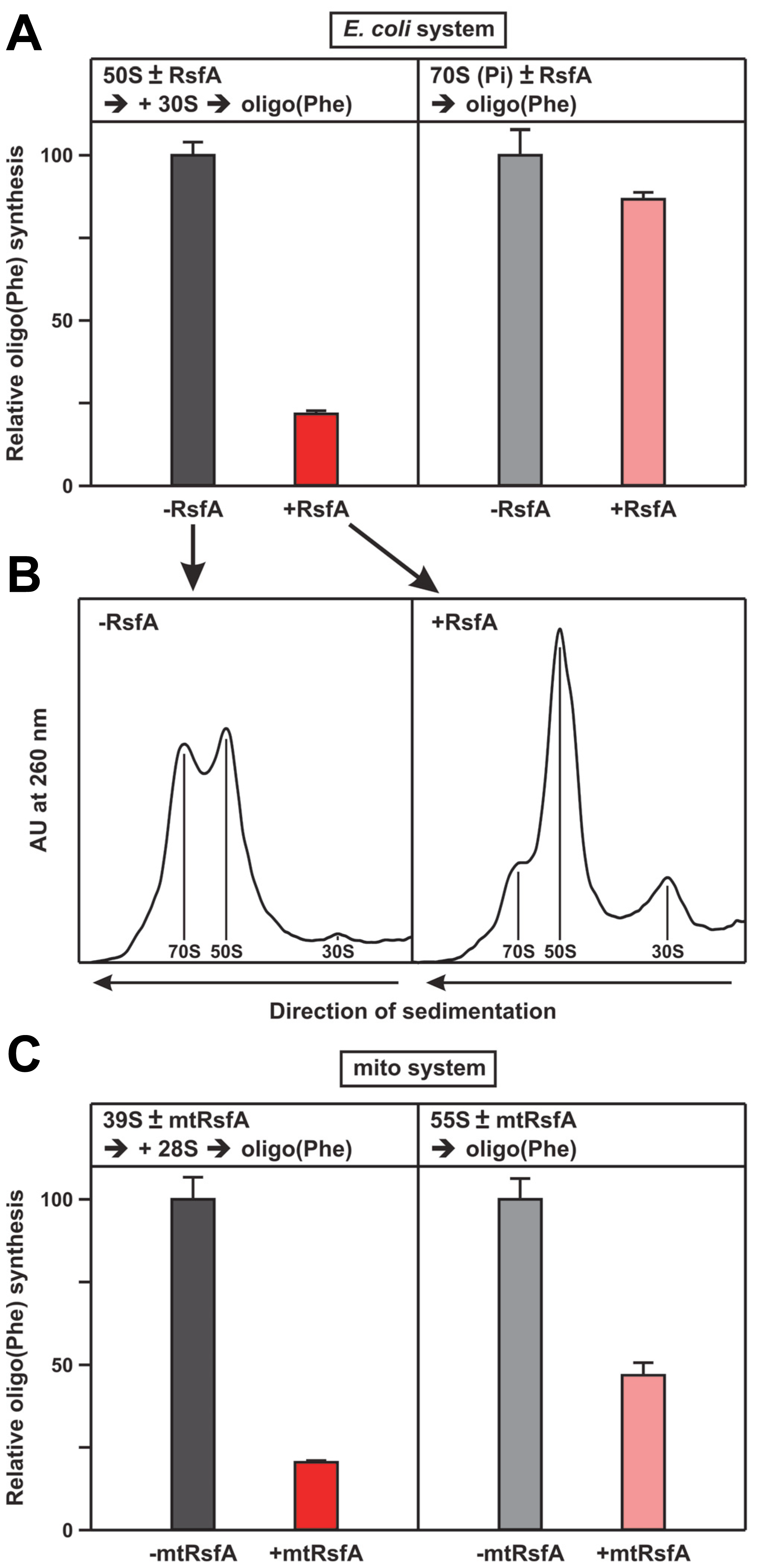 RsfA inhibits translation by blocking ribosomal subunit joining.