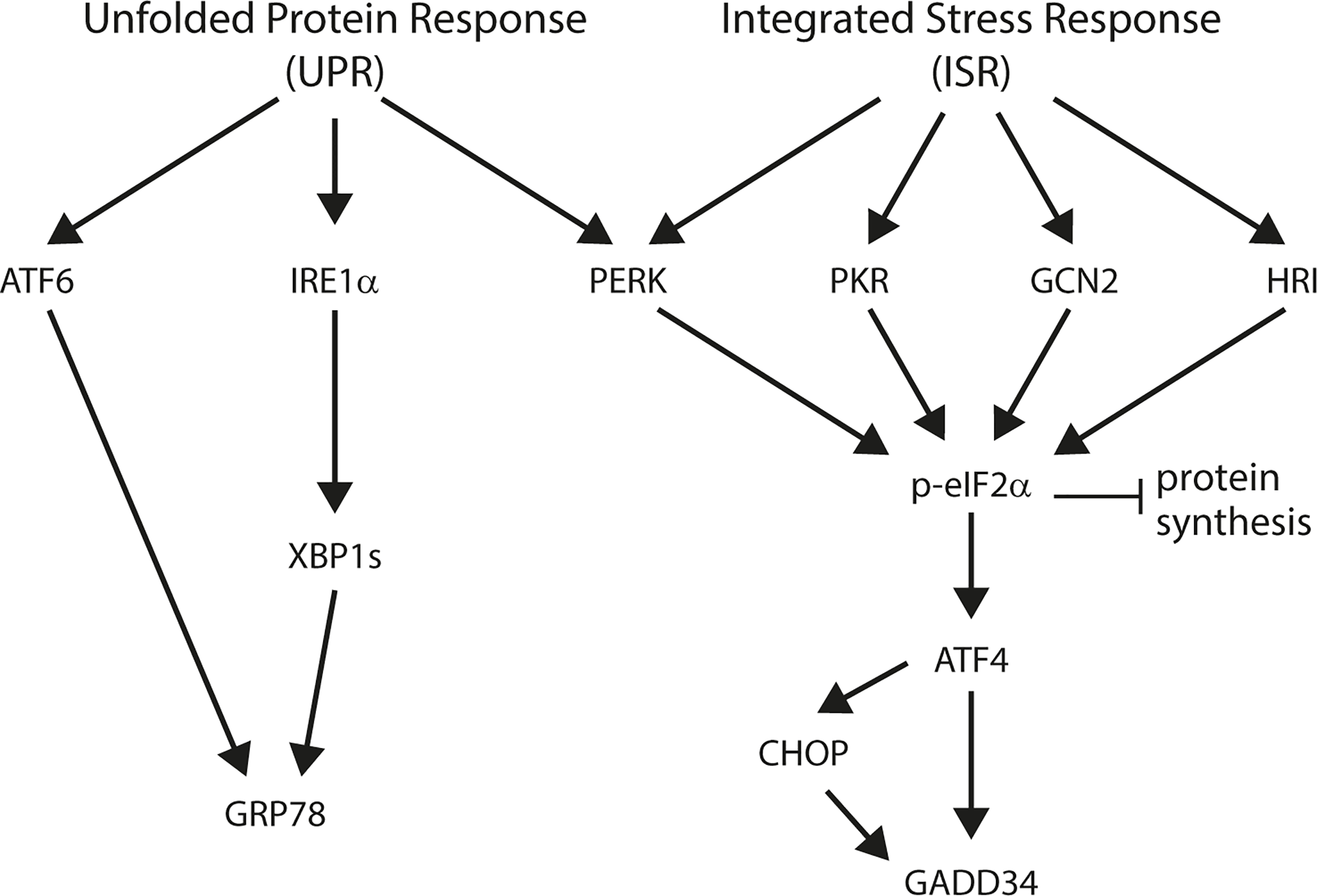 Schematic overview of the unfolded protein response (UPR) and integrated stress response (ISR).