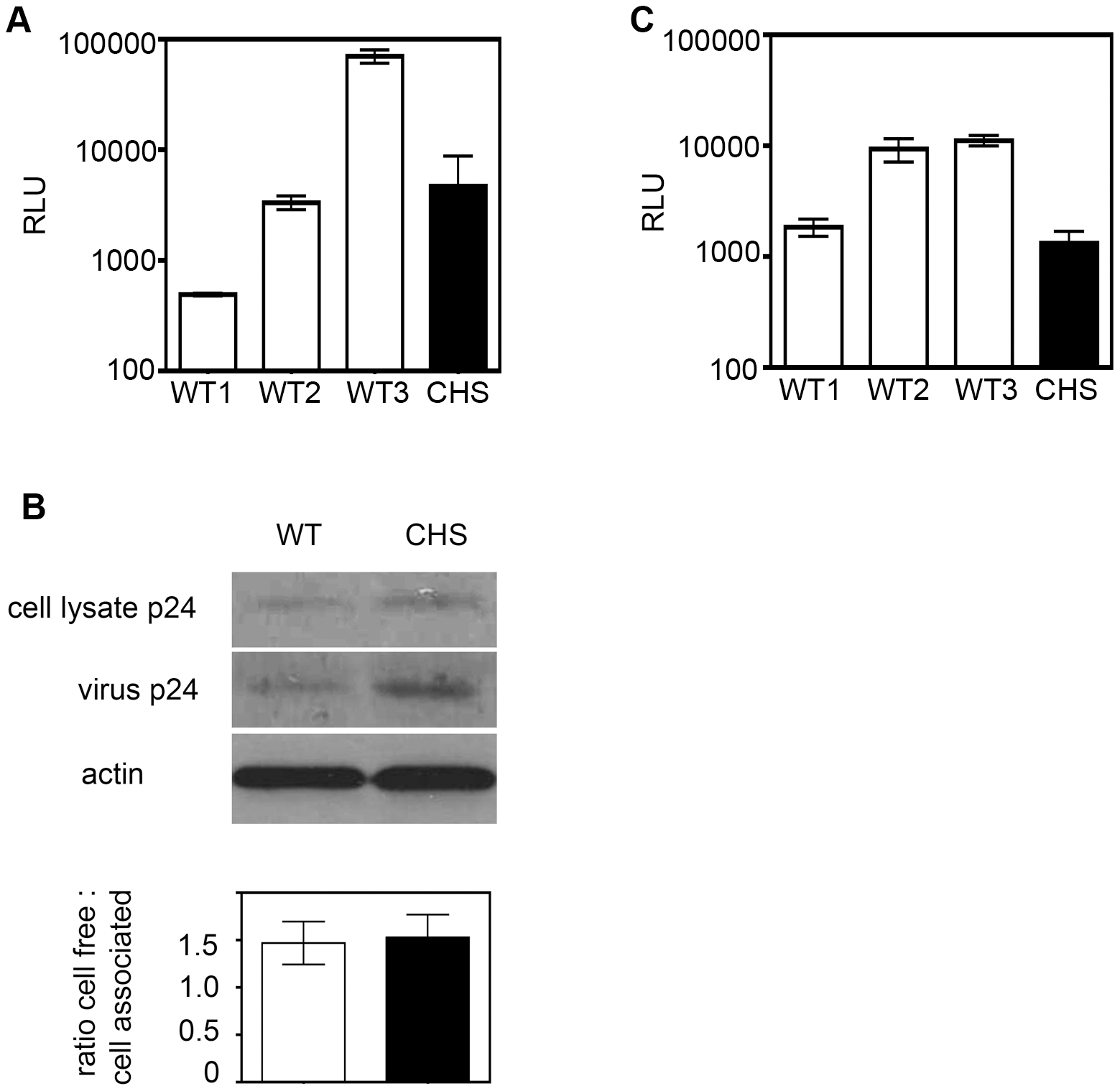 CHS cells support HIV-1 infection and Gag budding over a single- round of replication but transmit virus less efficiently by cell-to-cell spread.