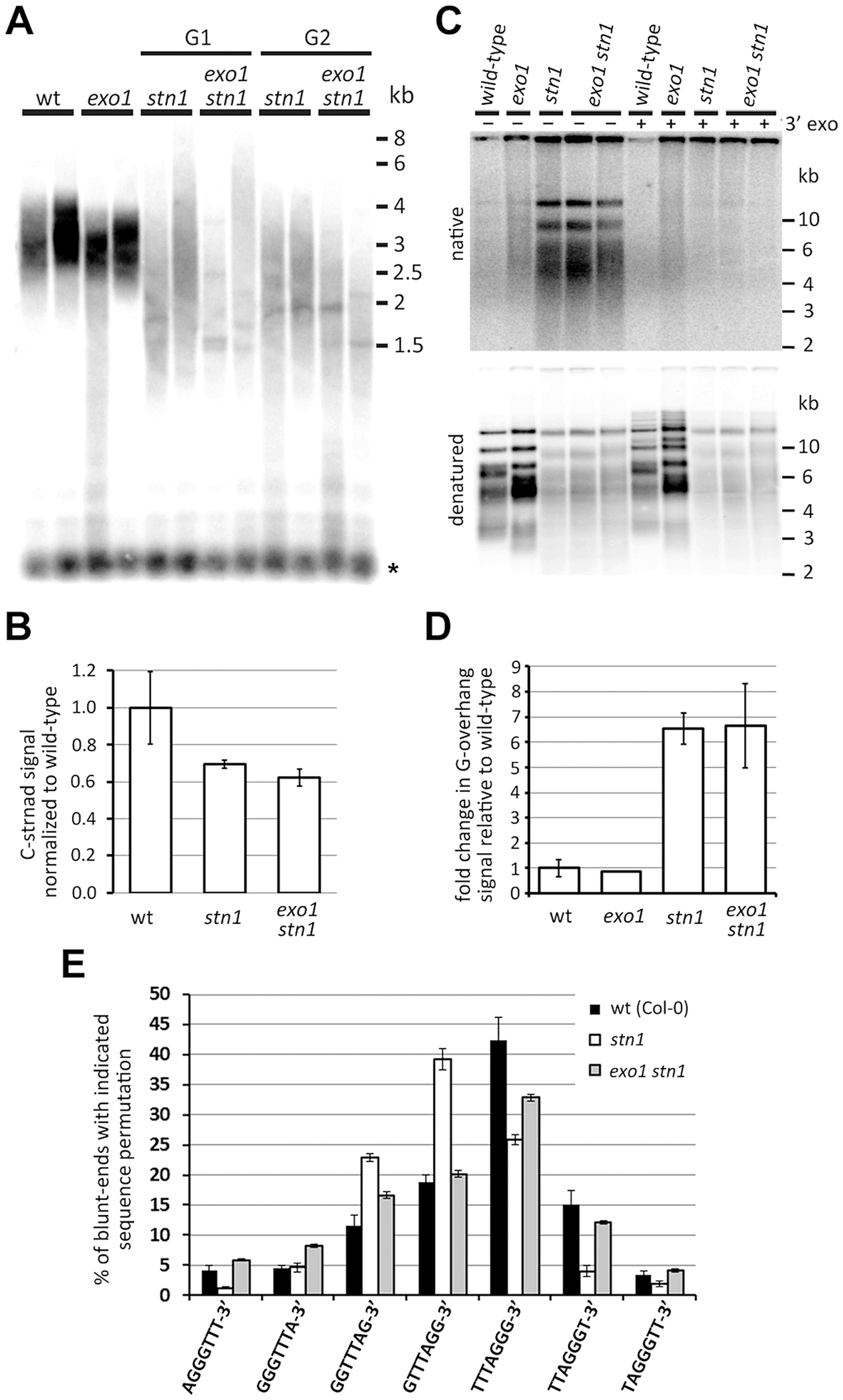 Effect of EXO1 on the structure of STN1-depleted telomeres.