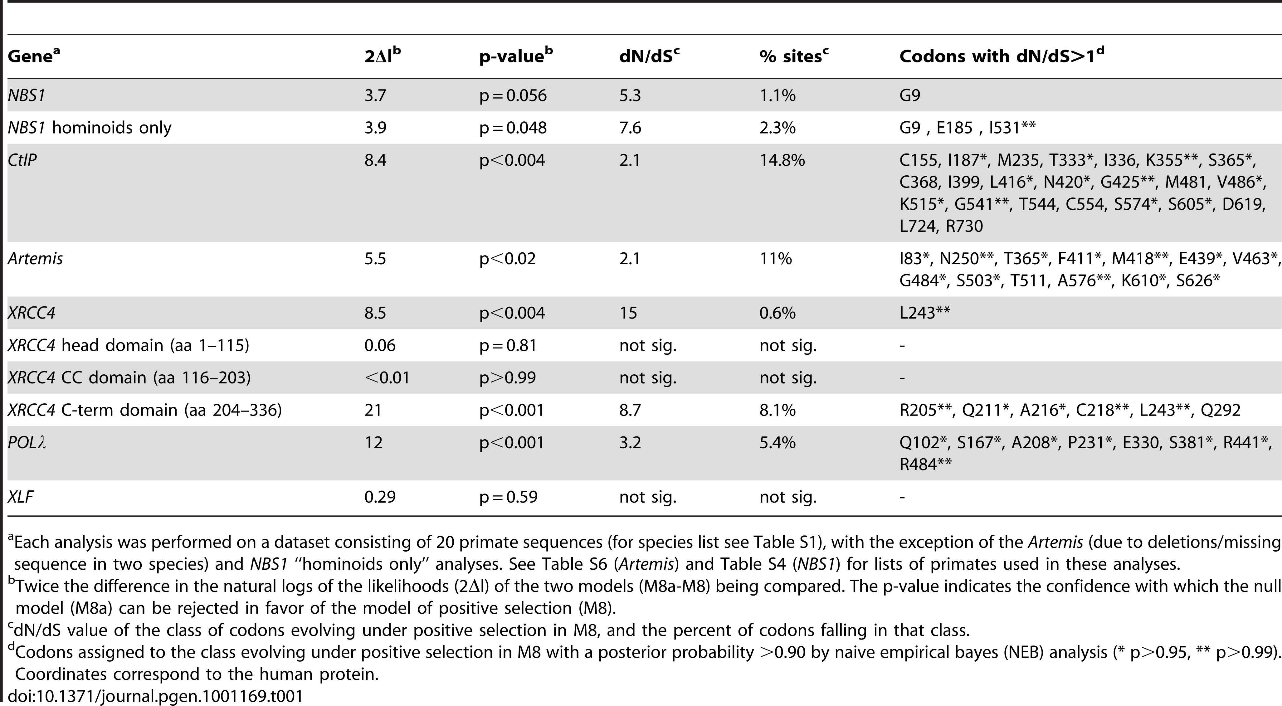 PAML analysis of primate NHEJ genes.
