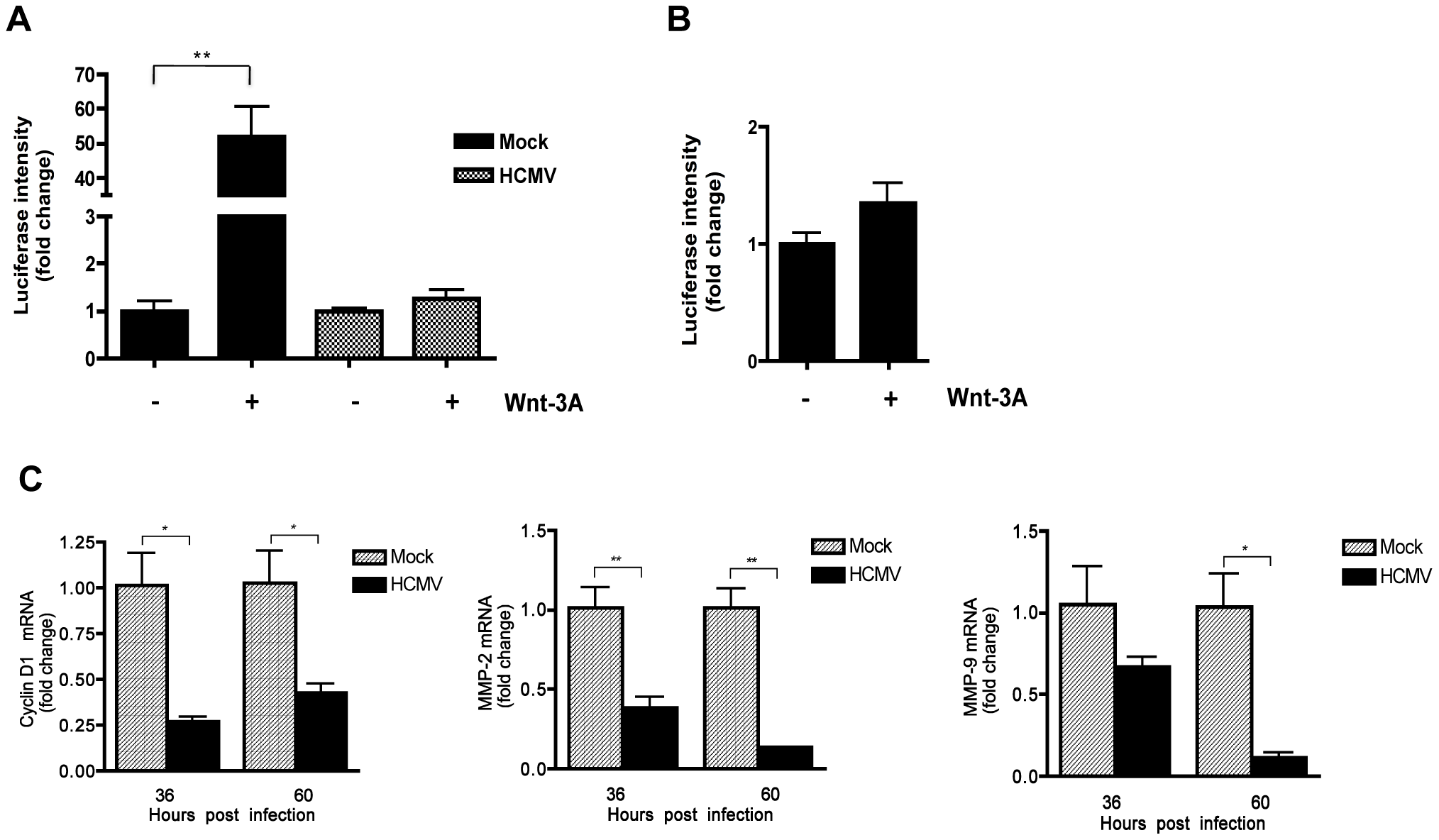 HCMV infection inhibits Wnt/β-catenin transcriptional activity in EVTs in response to Wnt stimulation.