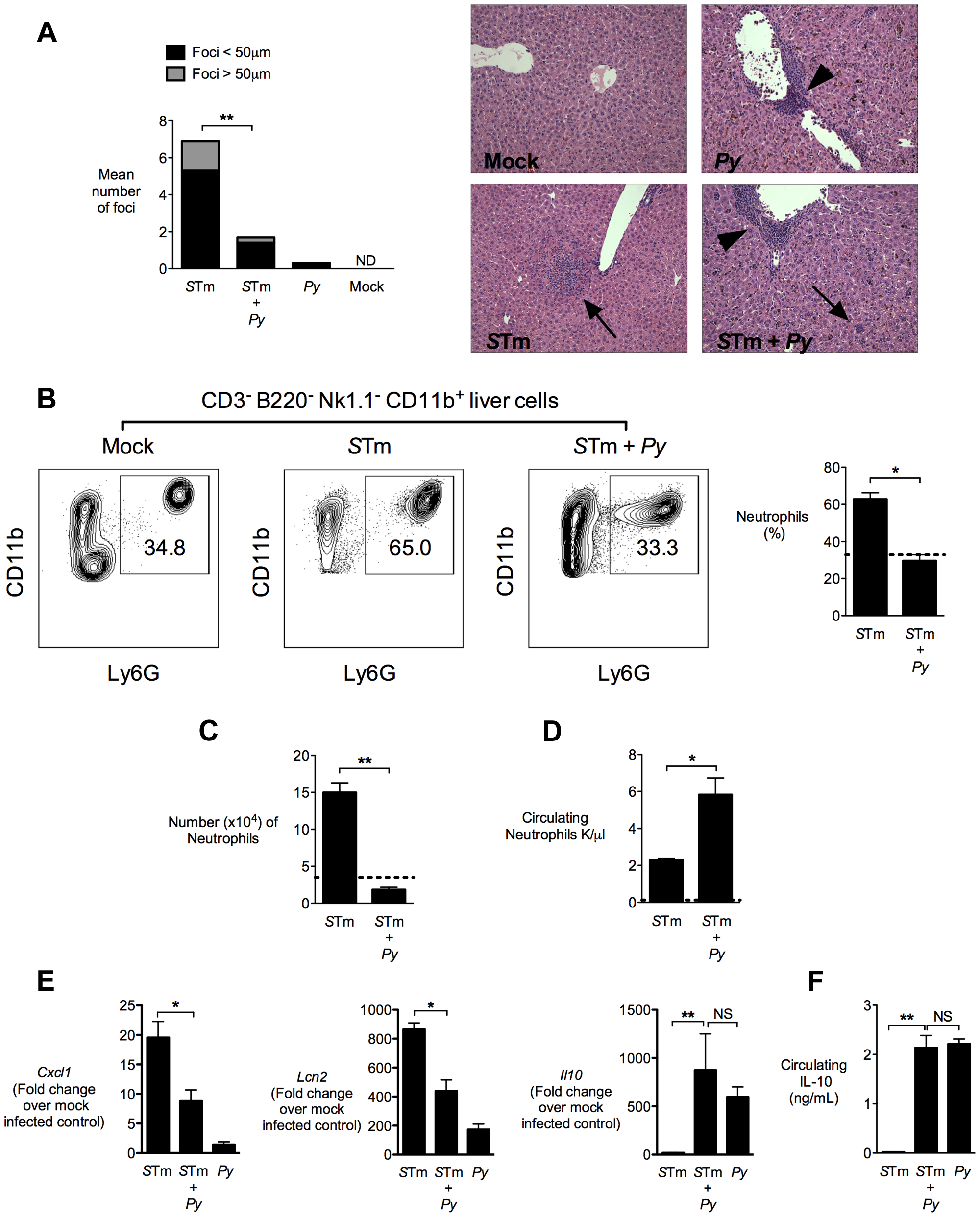 Decreased neutrophil-mediated pathology in the liver of co-infected mice.