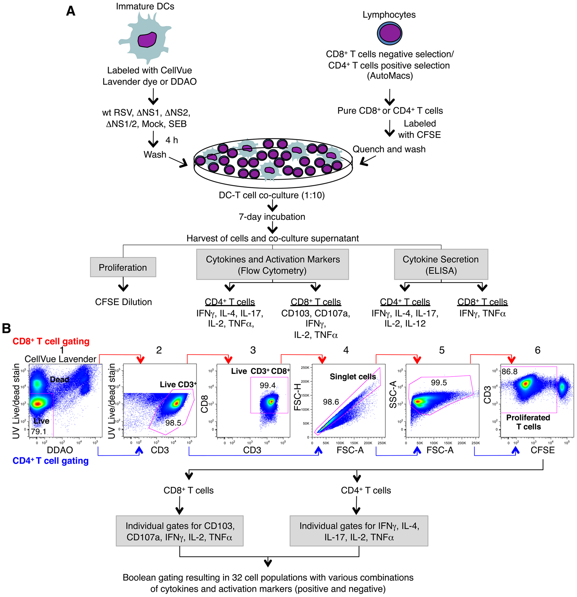 Co-cultivation of human DC and T cells and multi-color flow cytometetry analysis of T cells.