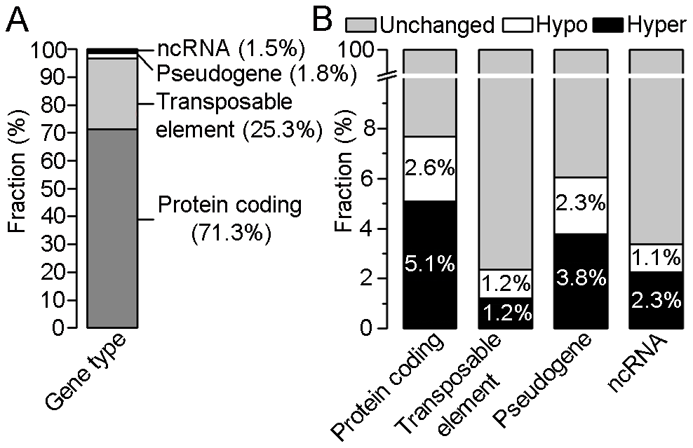 Distribution of differentially methylated regions (DMRs) within four gene types.