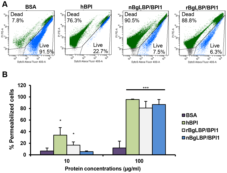 BgLBP/BPI1s permeabilize membranes and induce death of short LPS <i>E. coli</i>.