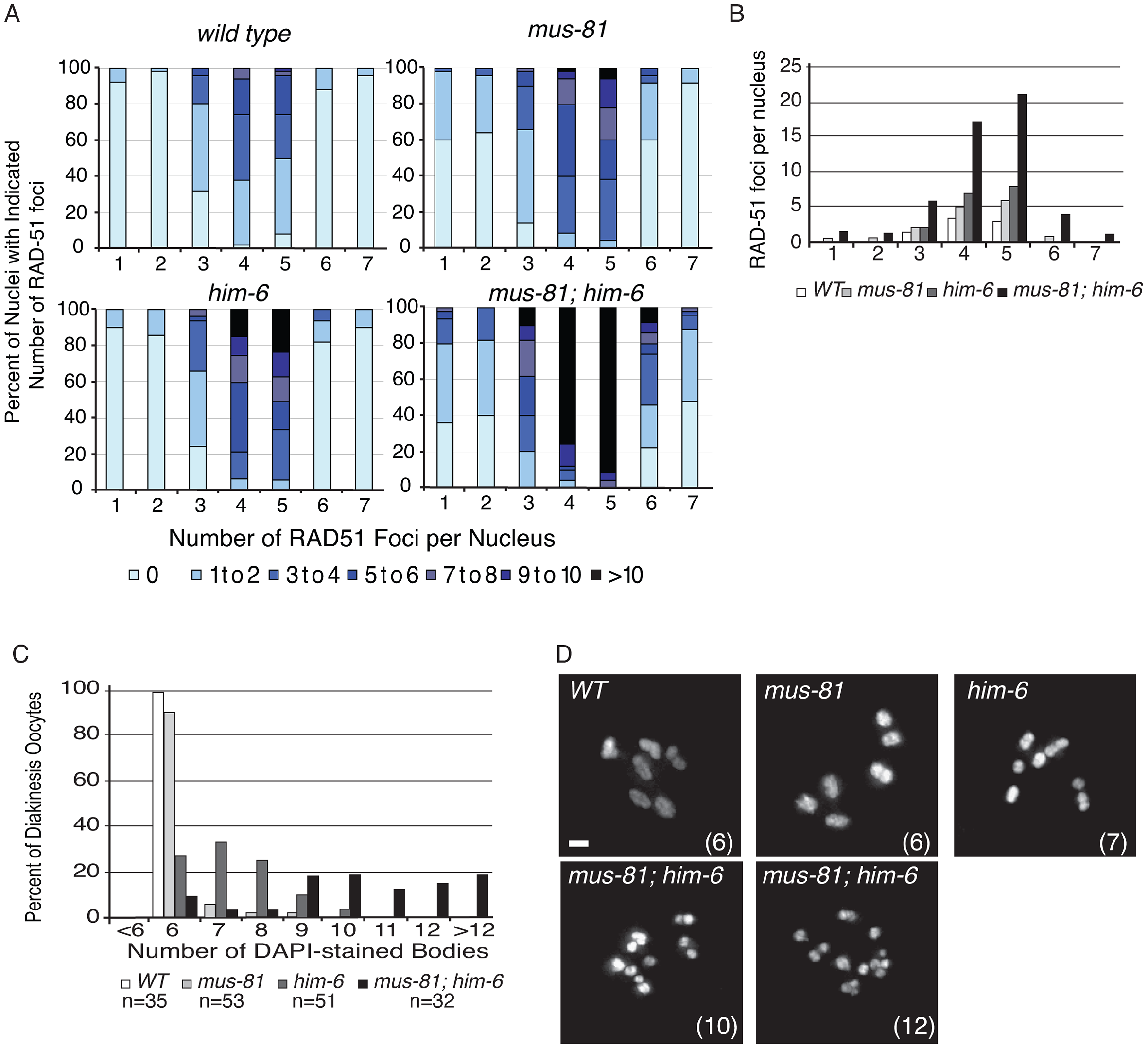 MUS-81 and HIM-6 prevent the accumulation of recombination intermediates and chromosome instability.