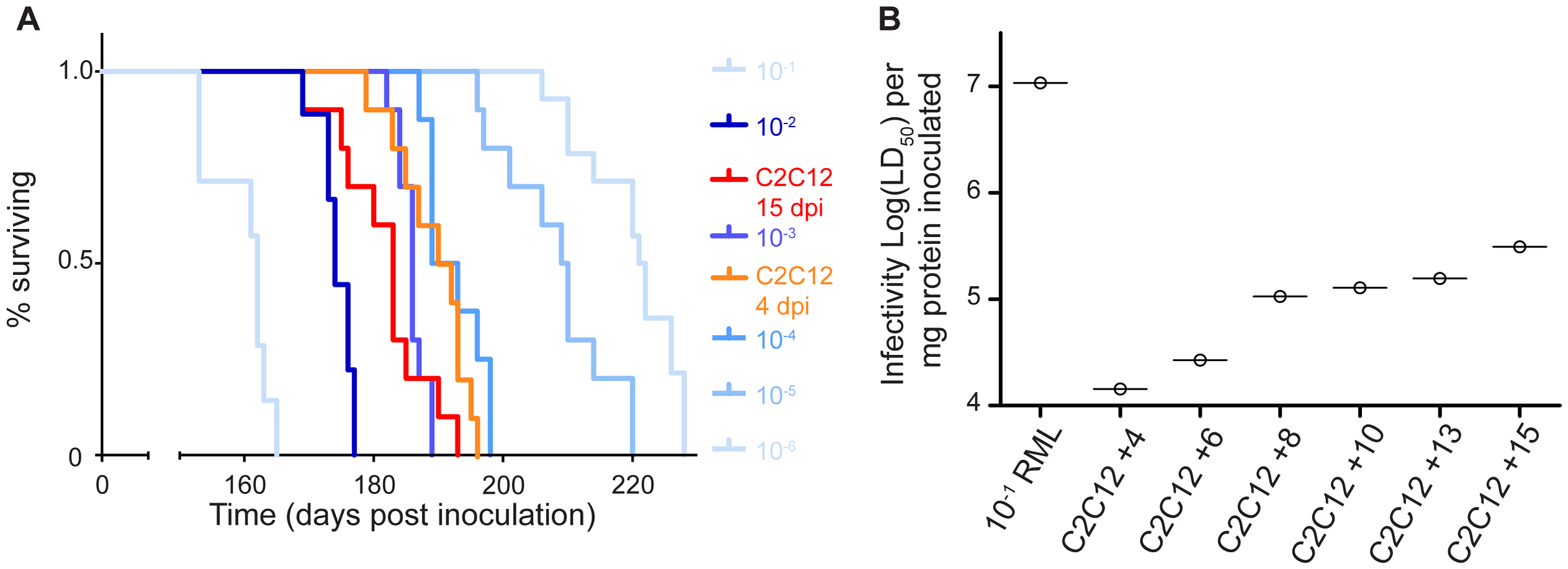 C2C12 myotubes replicate prions to high levels of infectivity.