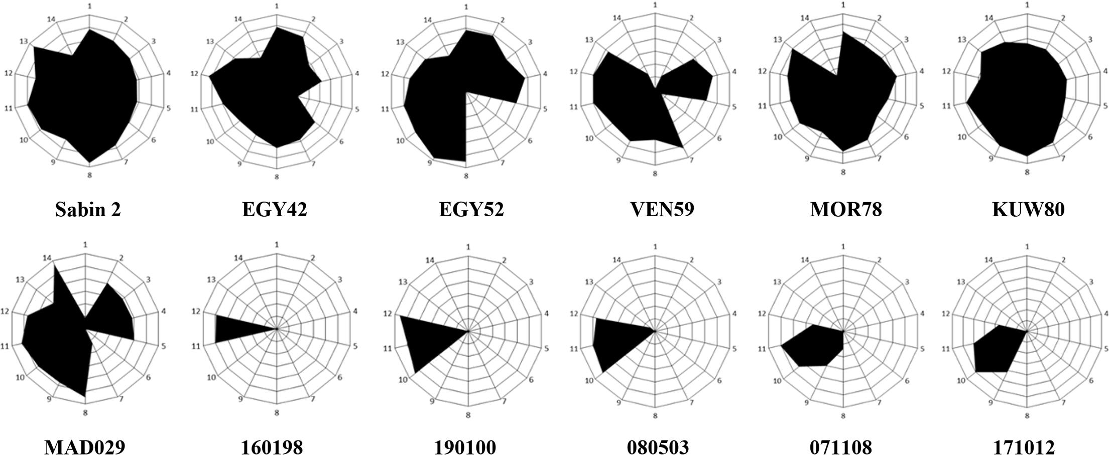 Antigenic structure of iVDPV strains.