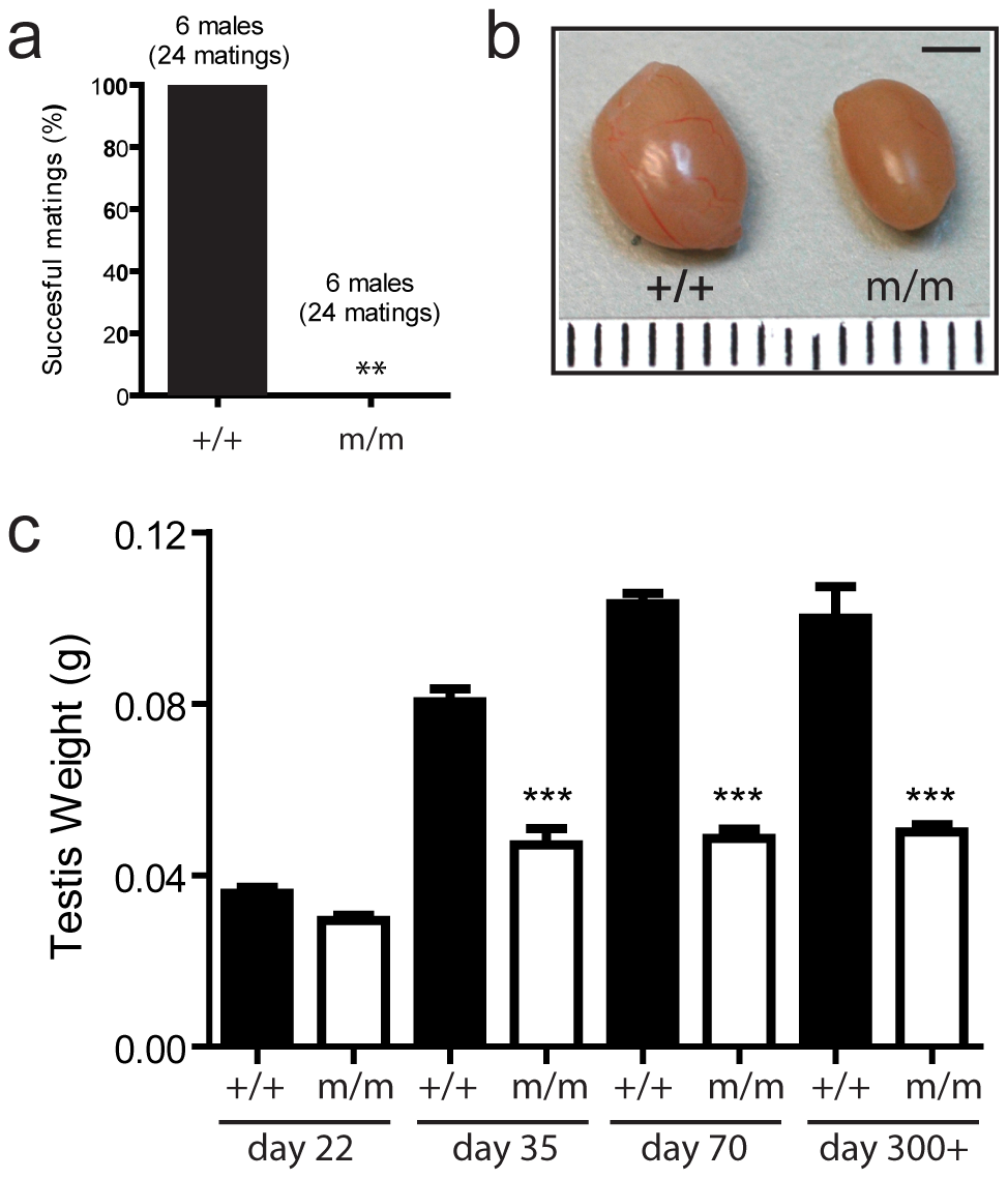 A novel mouse model of male-specific infertility.
