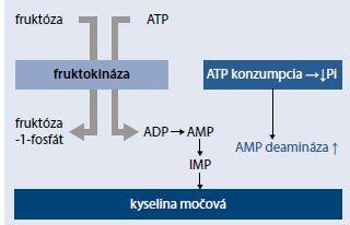 Schéma 3 | Fruktózou indukovaná produkcia kyseliny močovej v hepatocyte