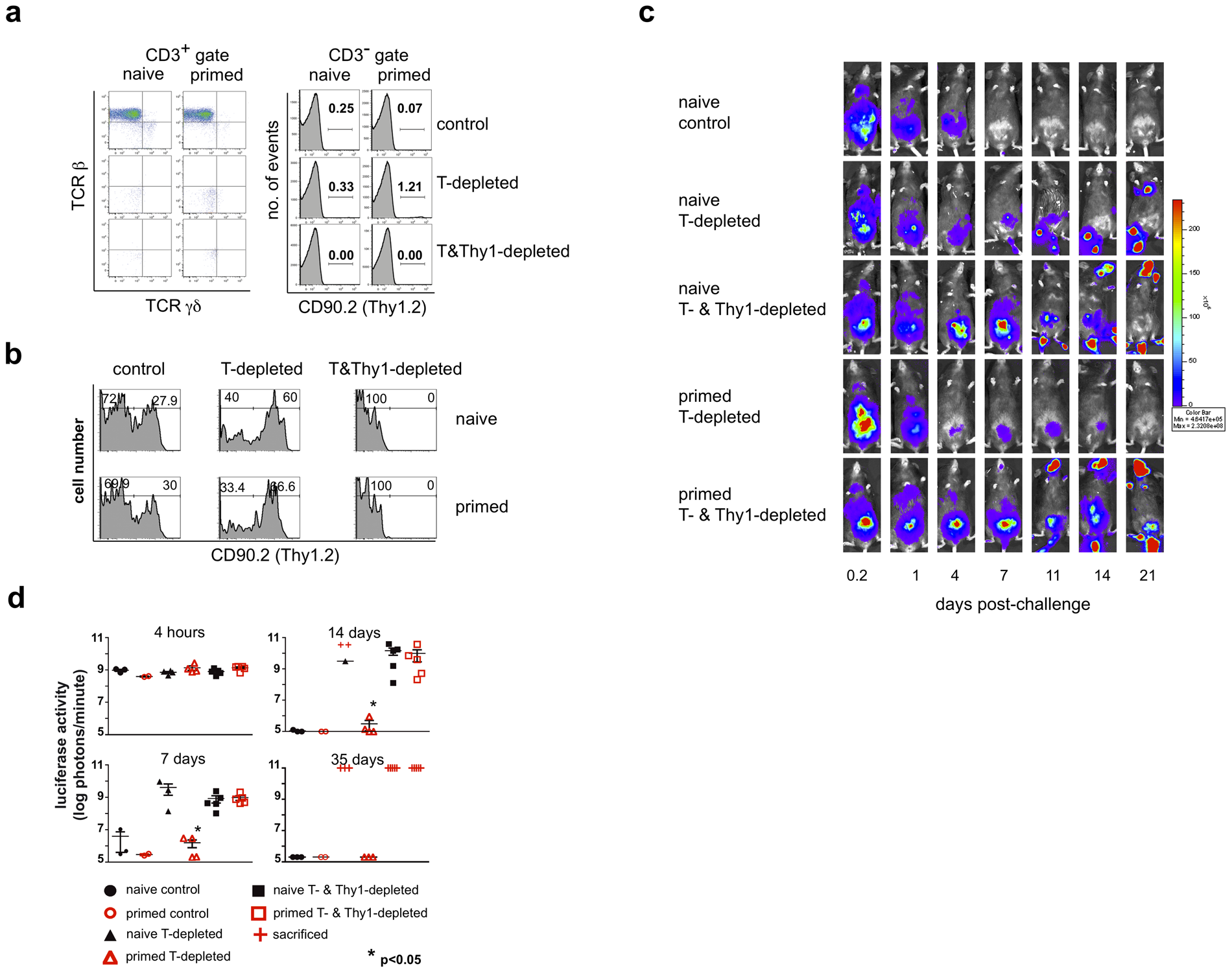 A Thy1<sup>+</sup> cell population mediates innate protection against a secondary challenge with vaccinia virus.