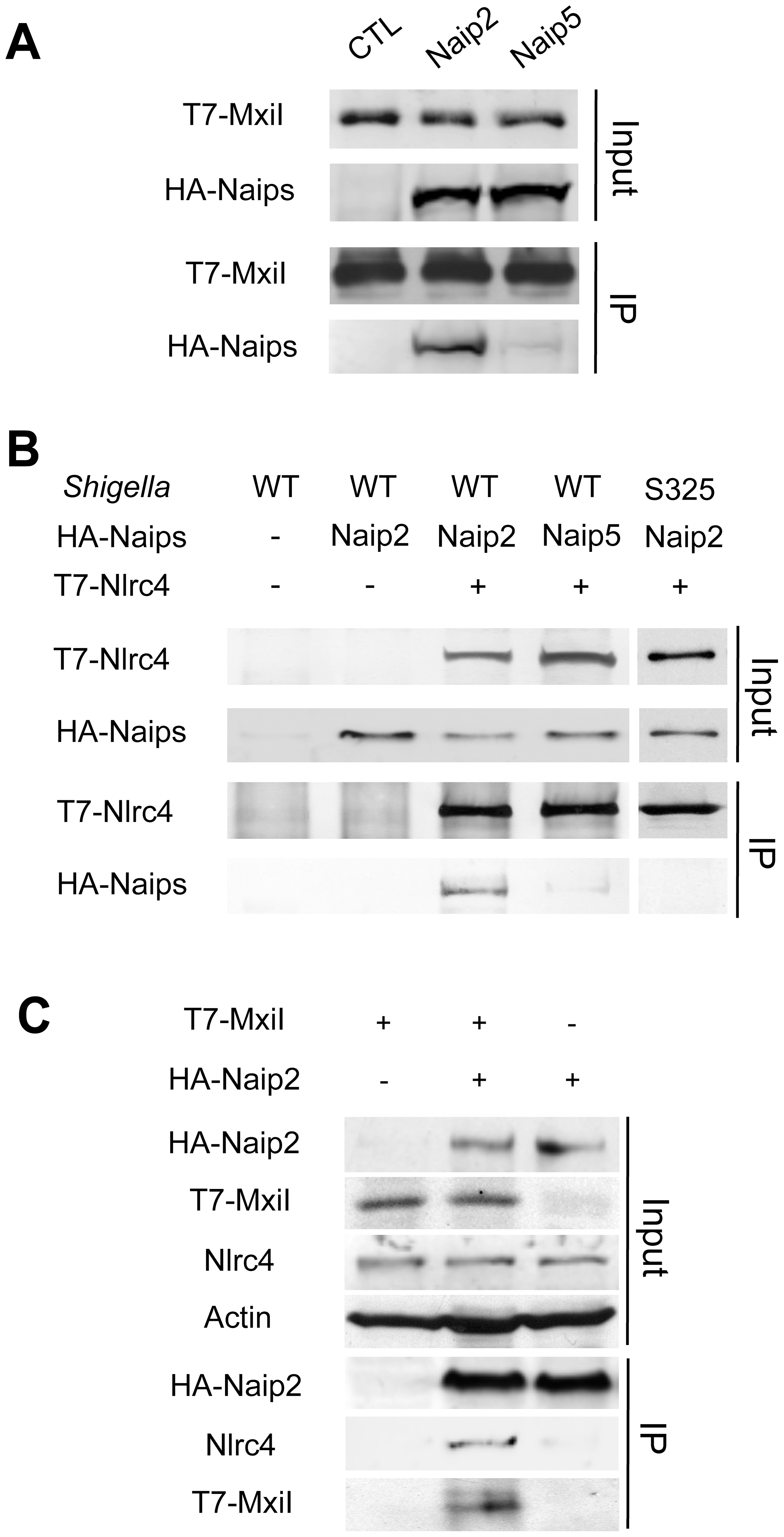 <i>Shigella</i> MxiI interacts with Naip2 and promotes the interaction of Naip2 with Nlrc4.